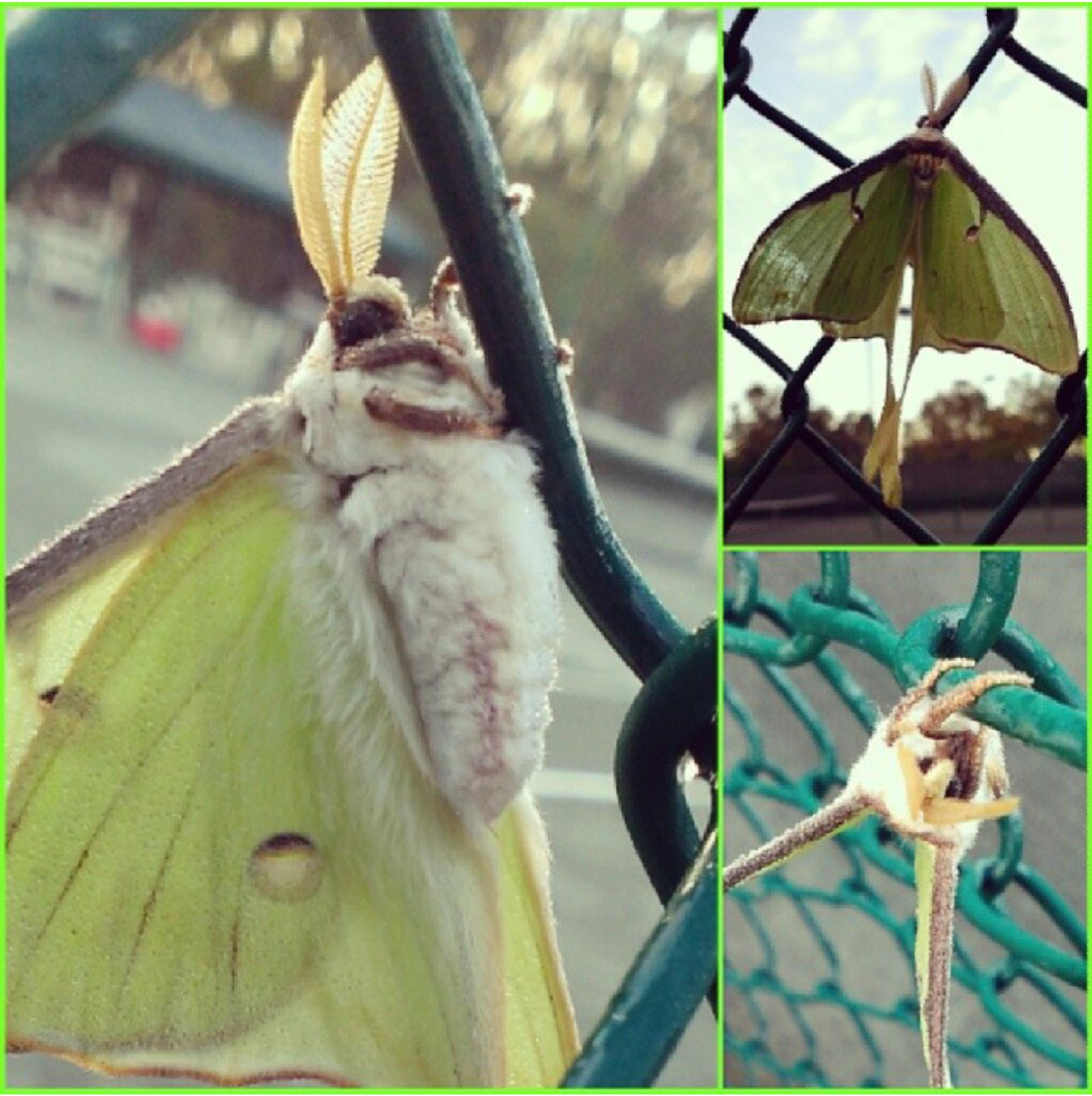 Green Moth by Positively Perfect Photography