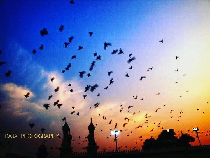flying pigeons by V S Rajesh Kusu 【RAJA】