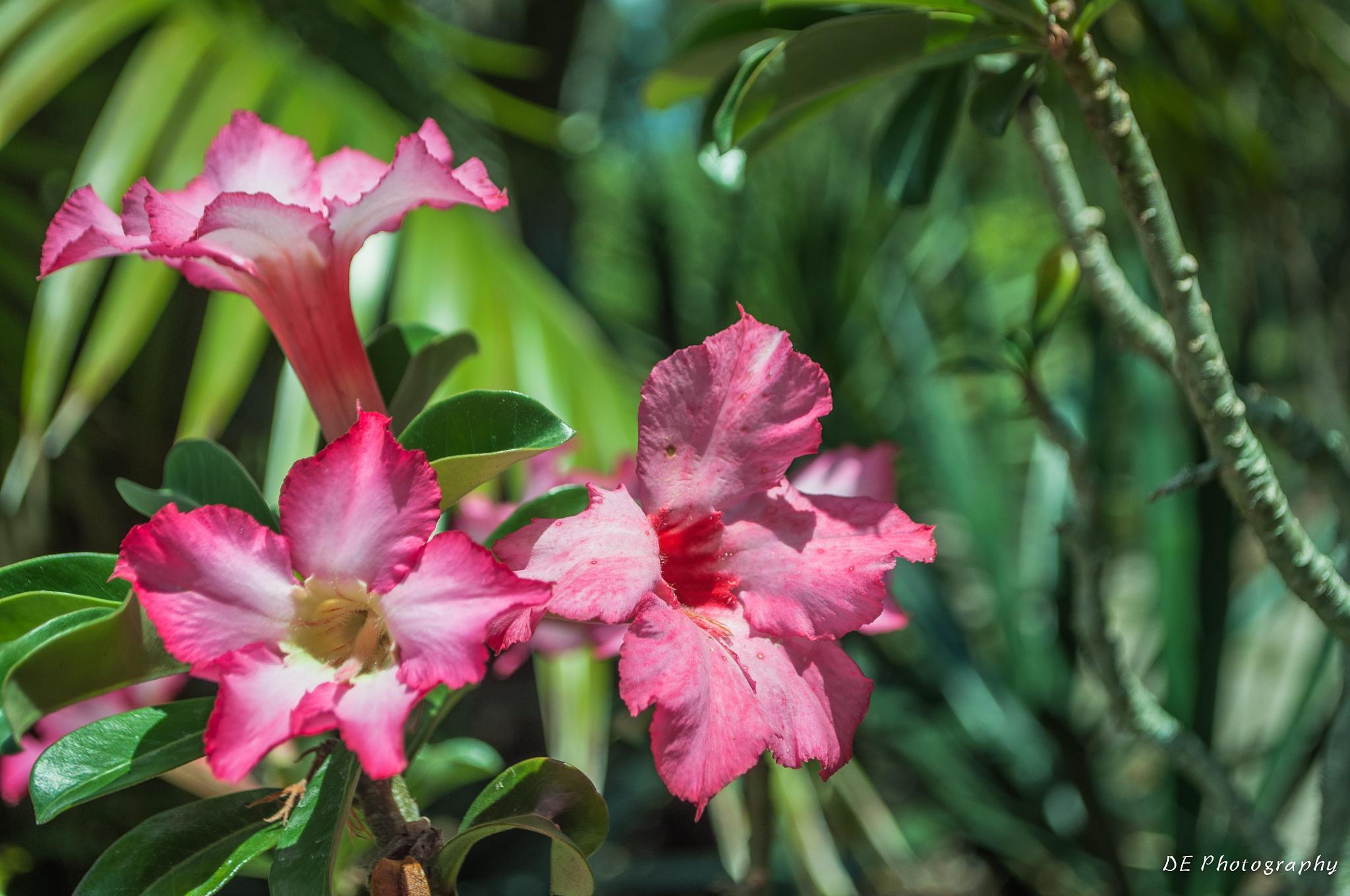 Exotic Flowers by danny.eberhardt.37