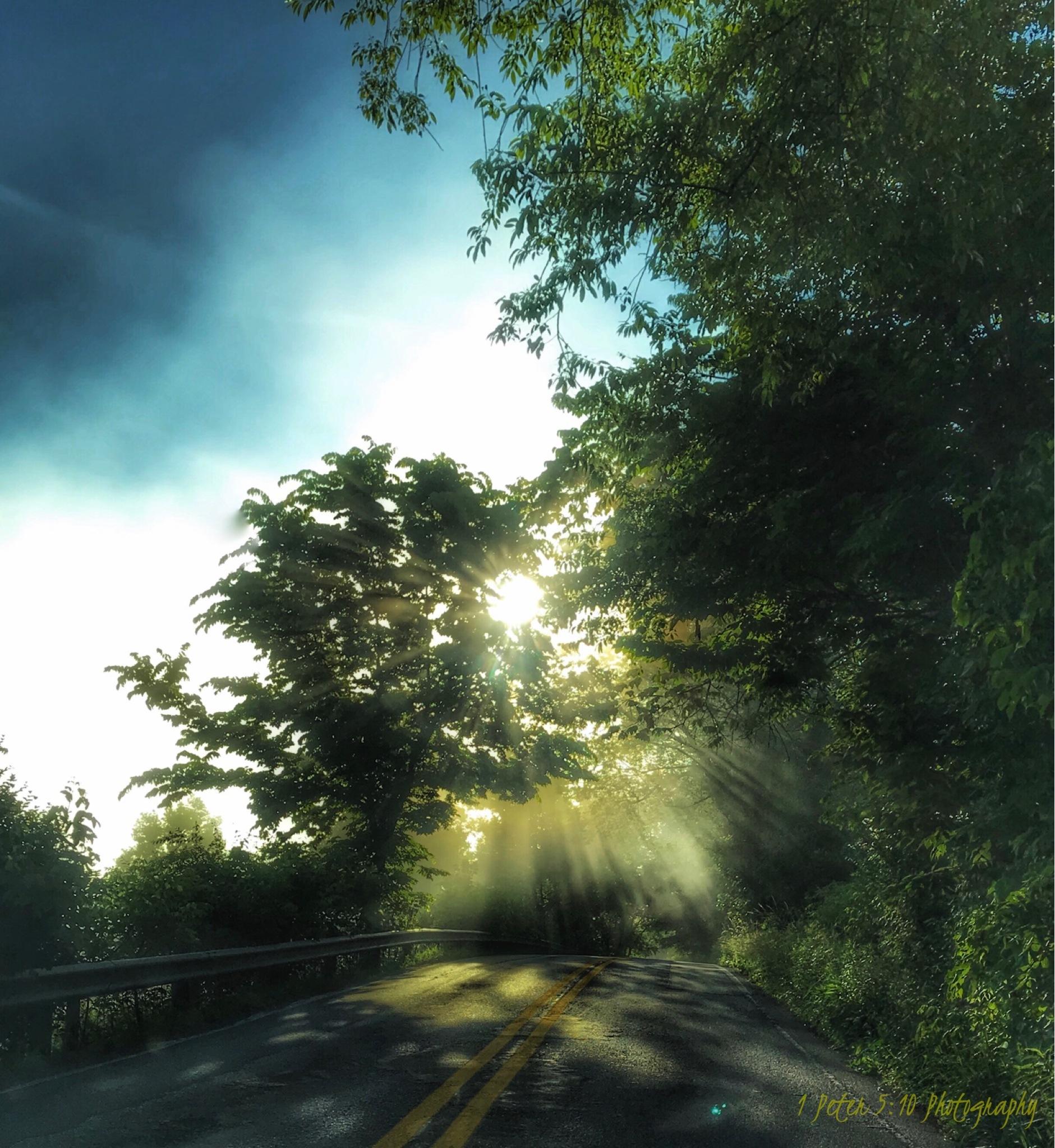Foggy morning  by Chris Sypolt