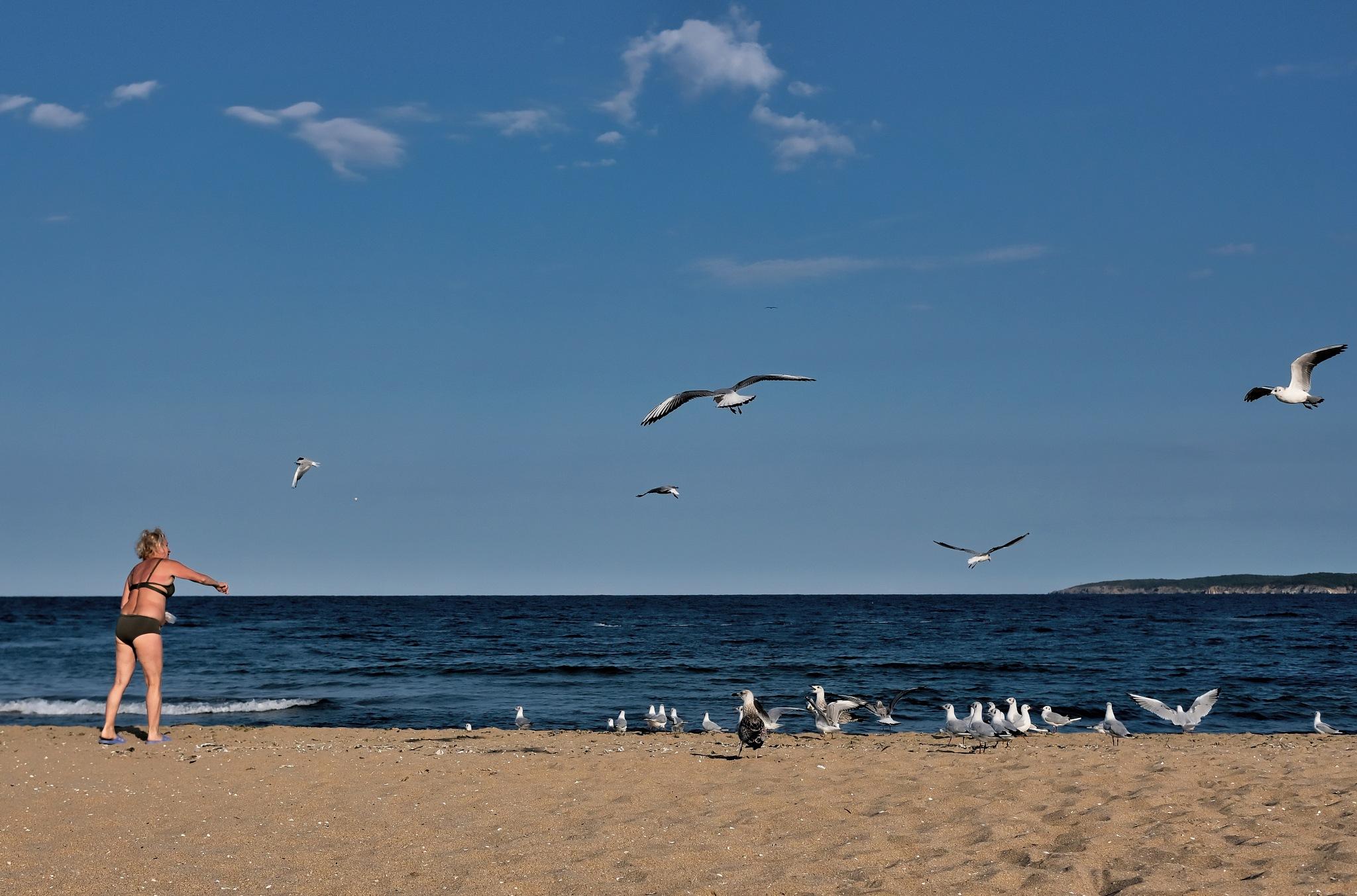 Lady Feeding Seagulls by Marius Matinca