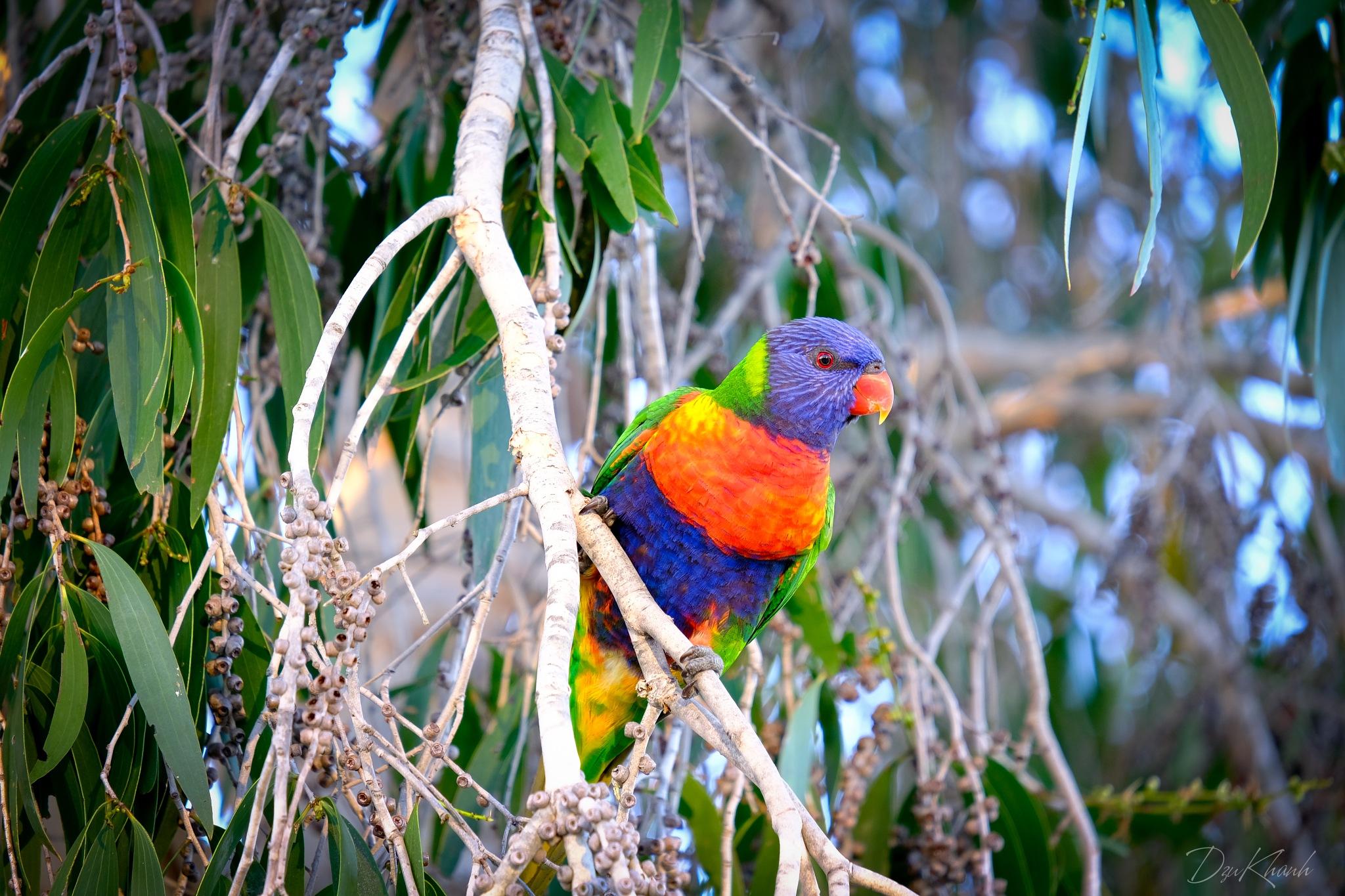 A Bird by Khanh Dzu Do