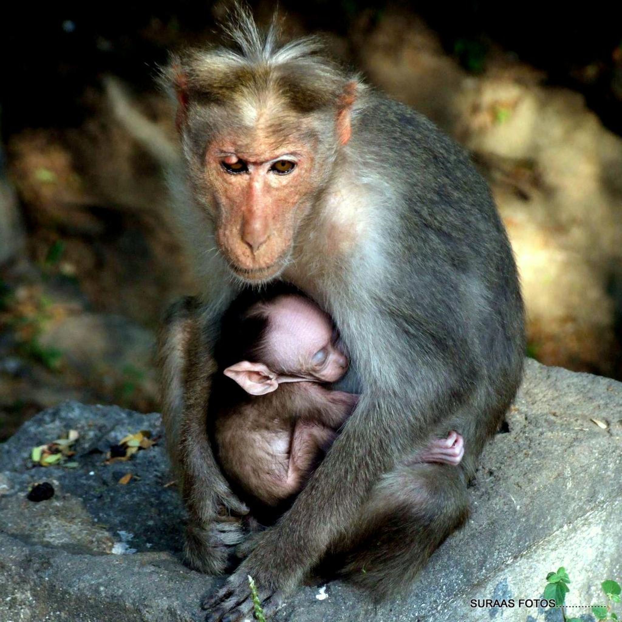 Please dont make noice..My son is sleeping........... by surendran