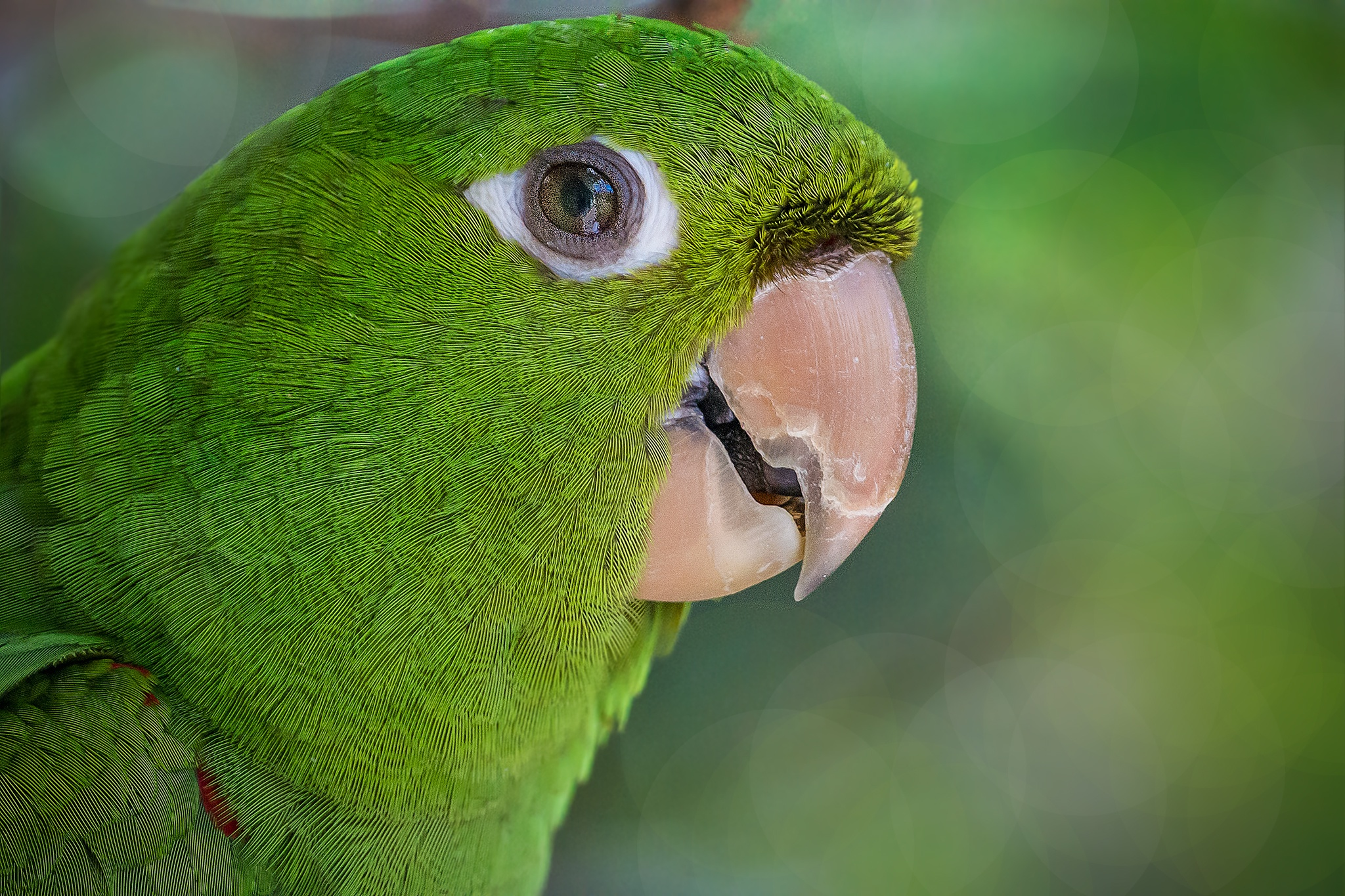 Photo in Animal #parrot #animal #bird