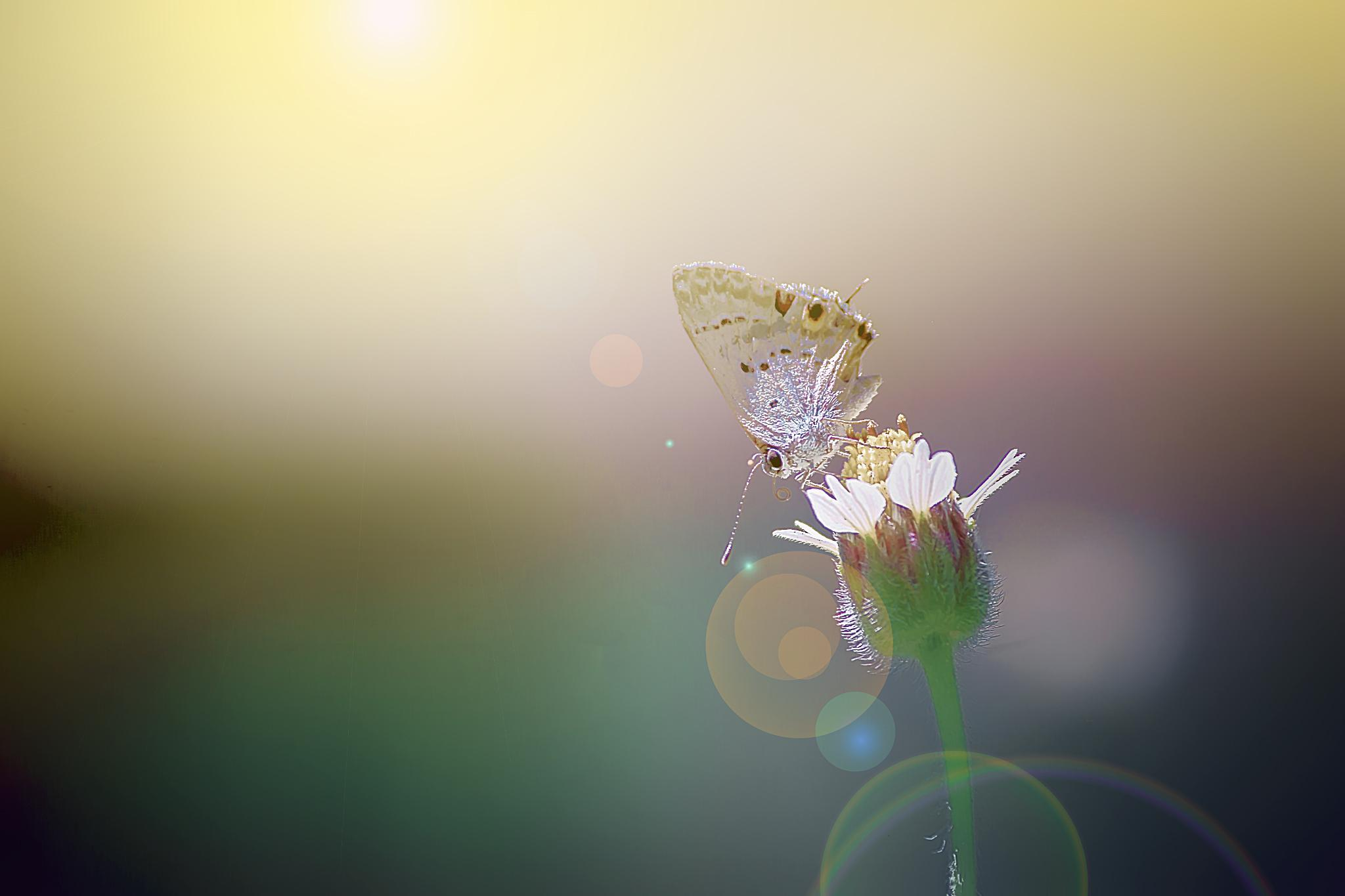 Facing the Sun 02 by Tony Guzman