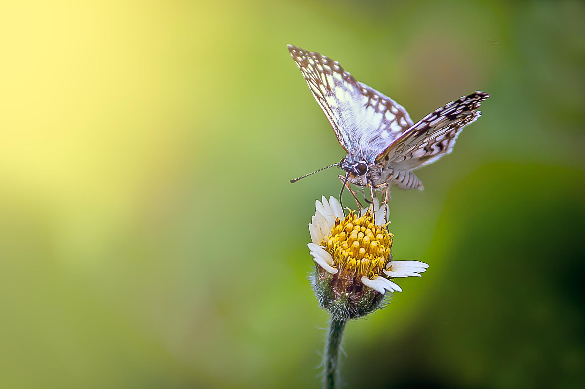 Tiny butterfly by Tony Guzman