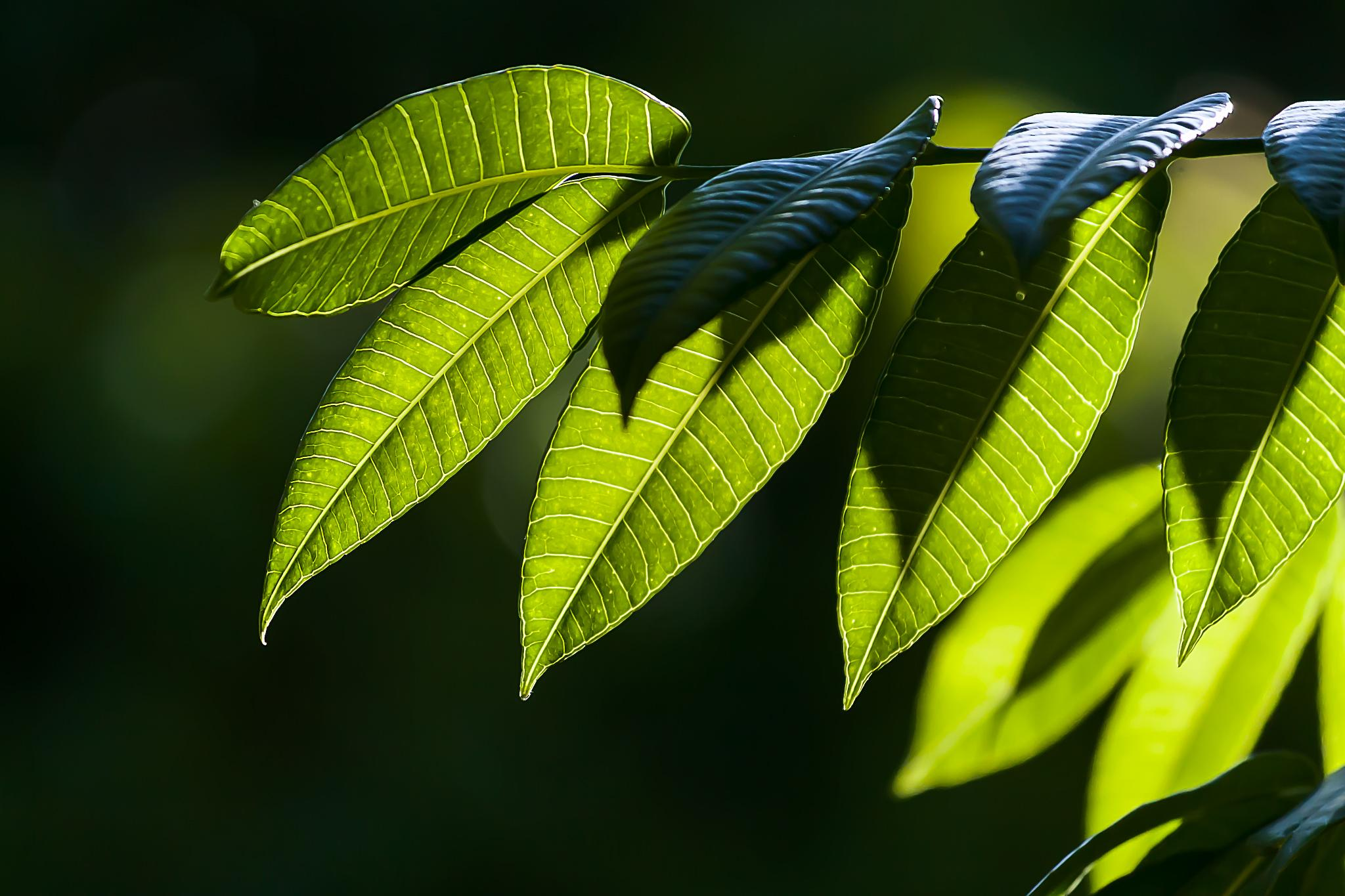 Green leaves by Tony Guzman