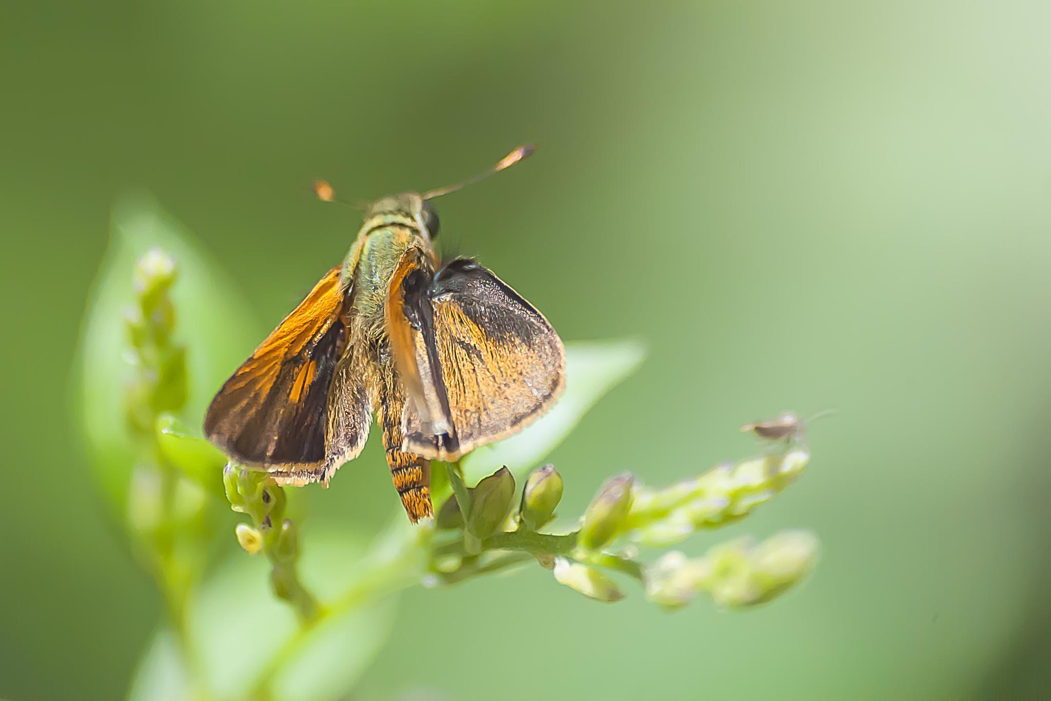 Moth or butterfly? by Tony Guzman