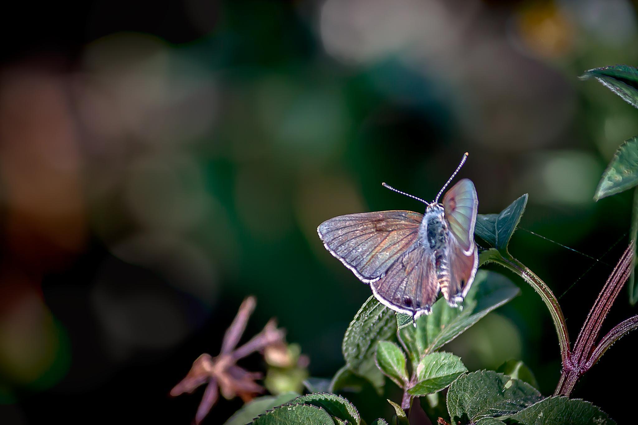 Butterfly 21 by Tony Guzman