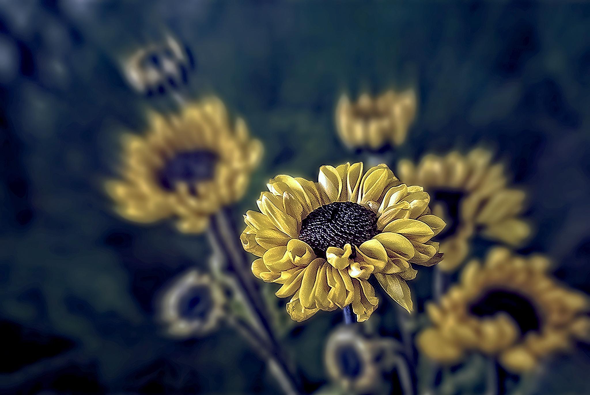 Yellow by Tony Guzman