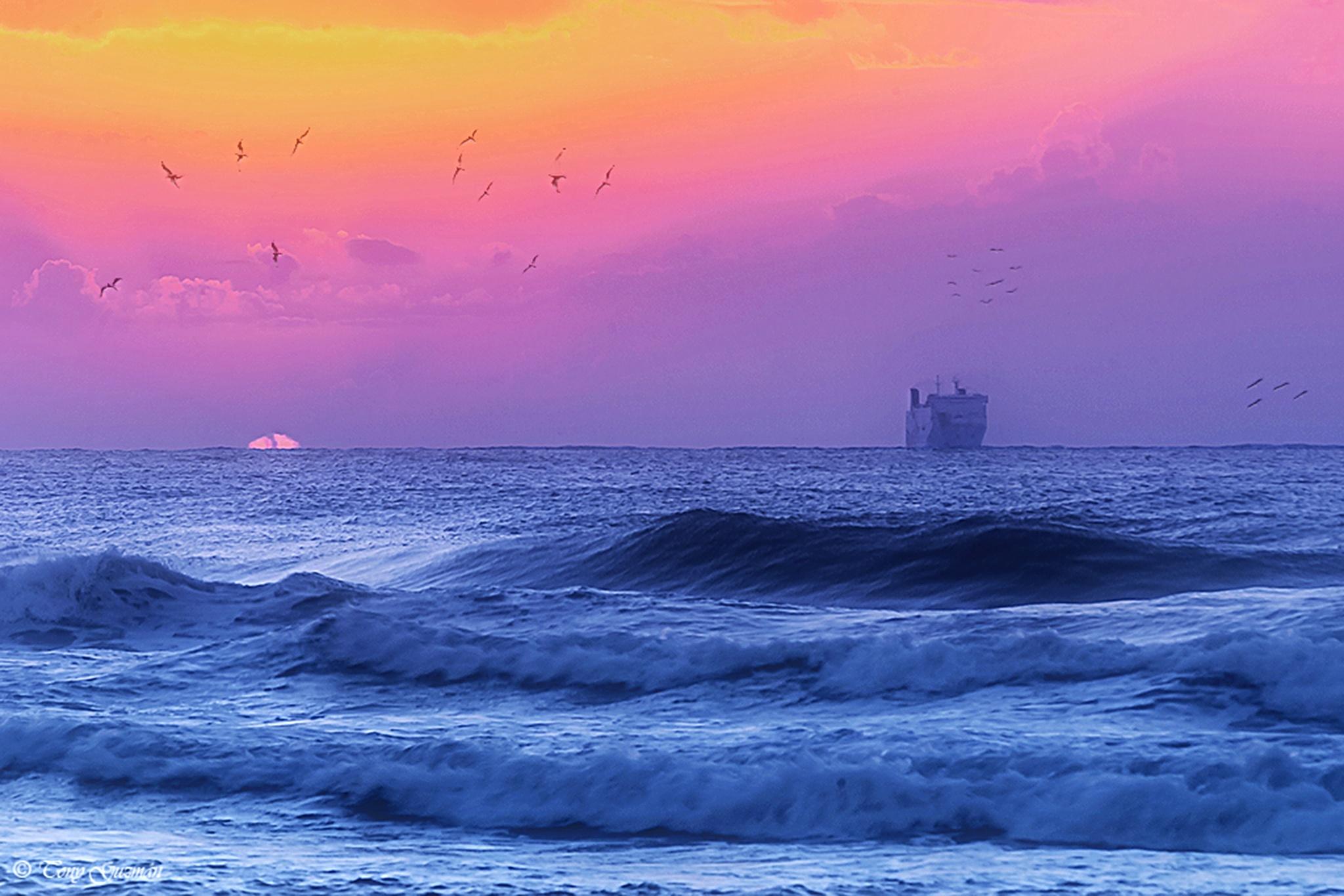 Foggy Dawn 3  by Tony Guzman