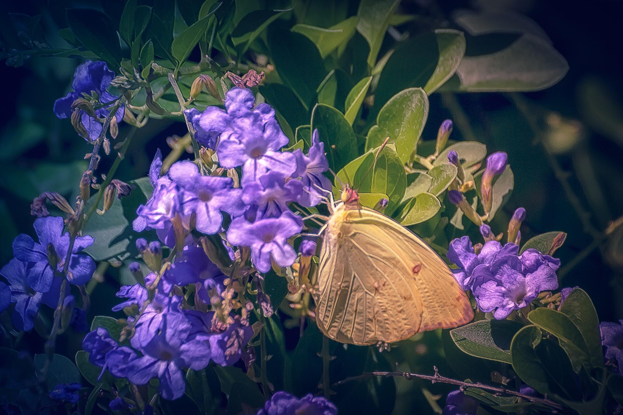 Butterfly 115 - Phoebis philea by Tony Guzman