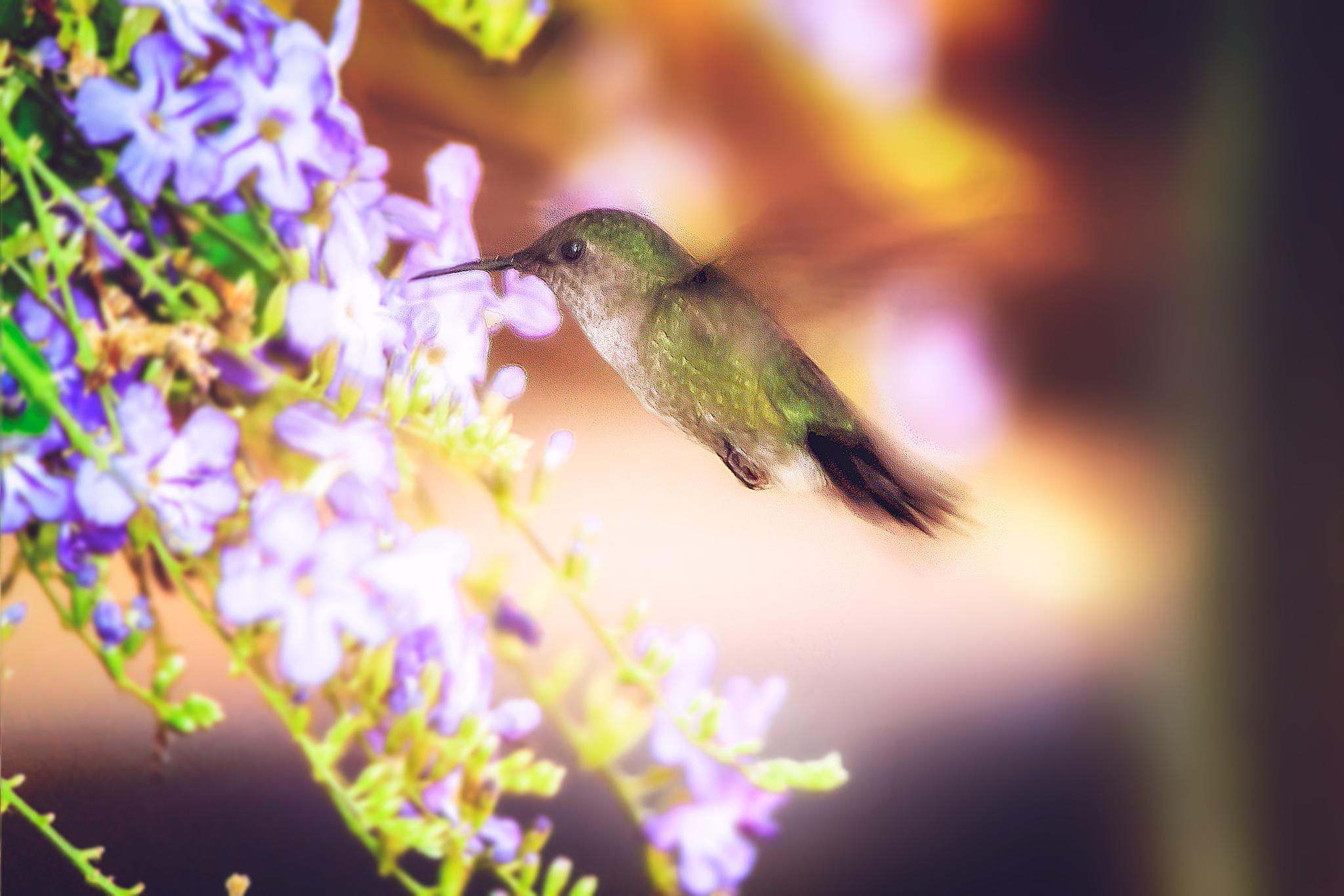 Hummingbird 16 by Tony Guzman