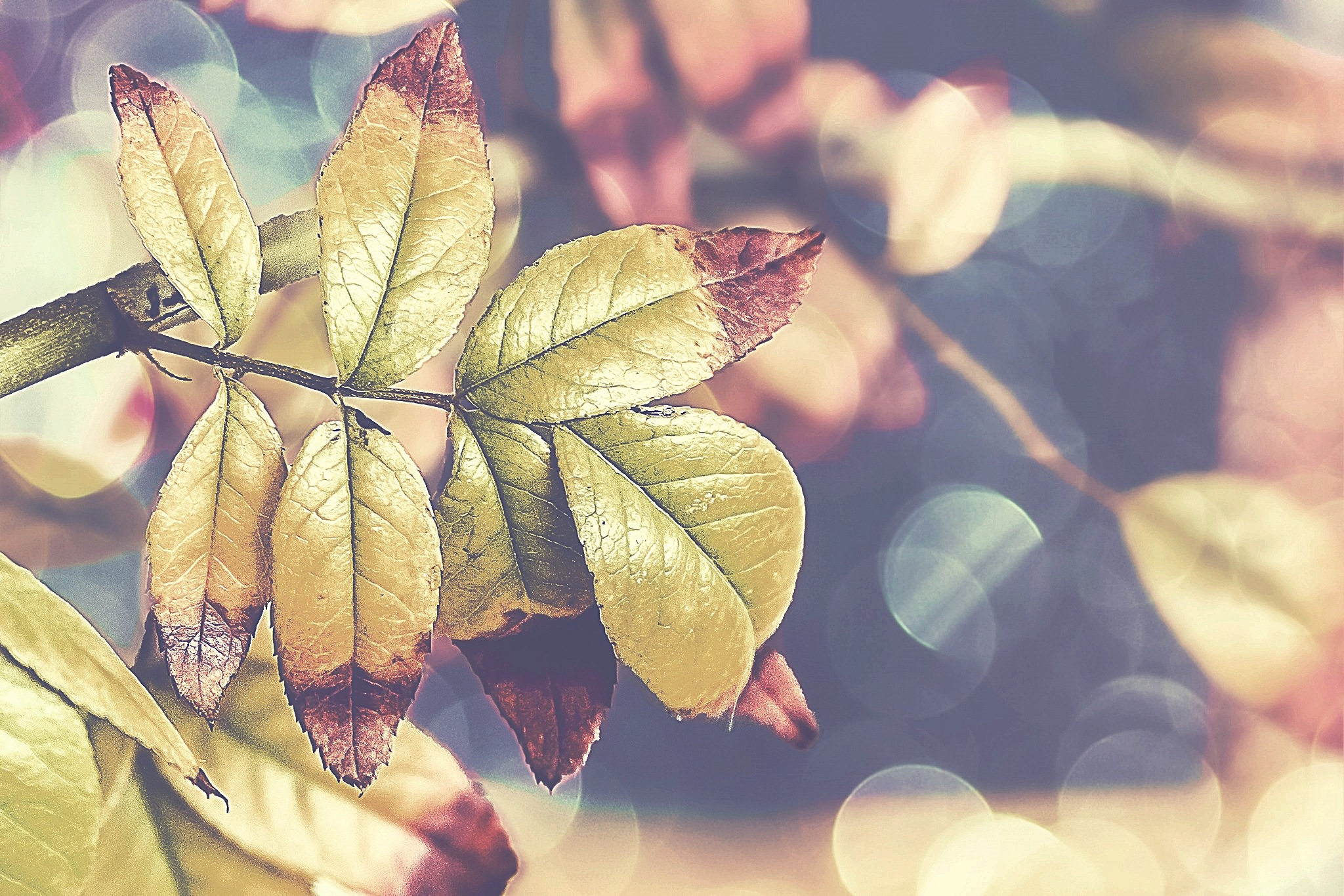 Photo in Nature #nature #autumn #leaves #bokeh