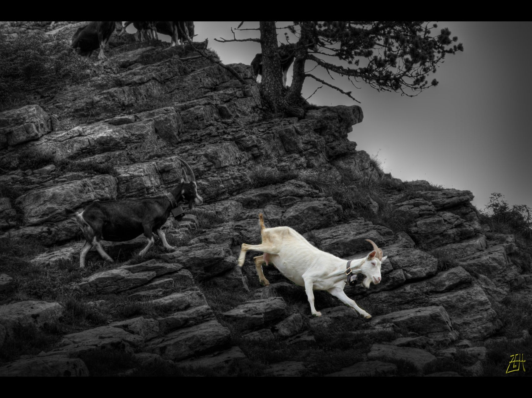 The White Goat by Zelidar