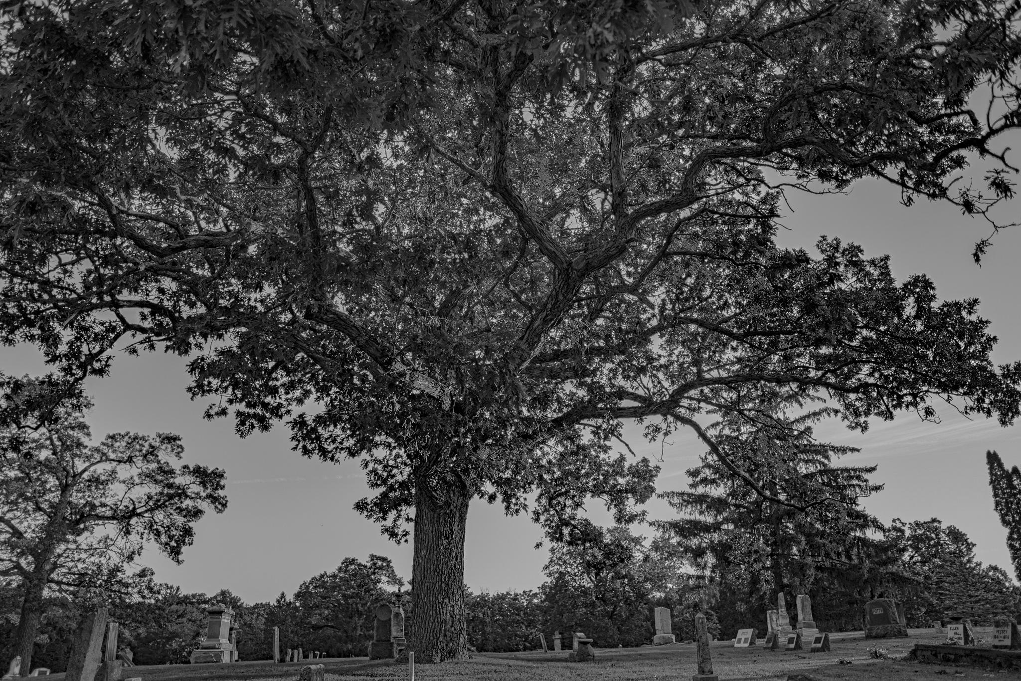 The Tree by Justin Wavruk