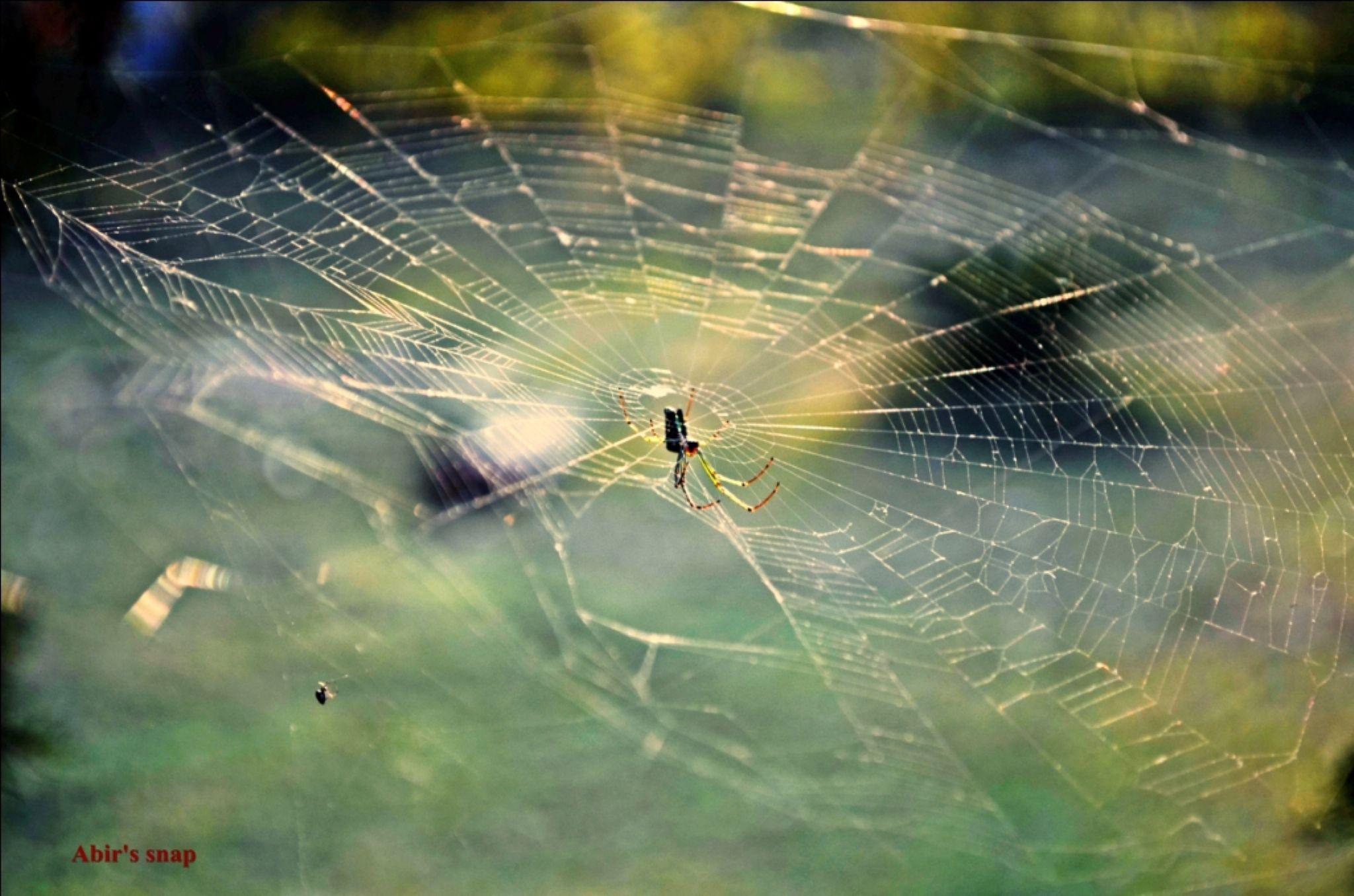 Spider by Abir Ghosh