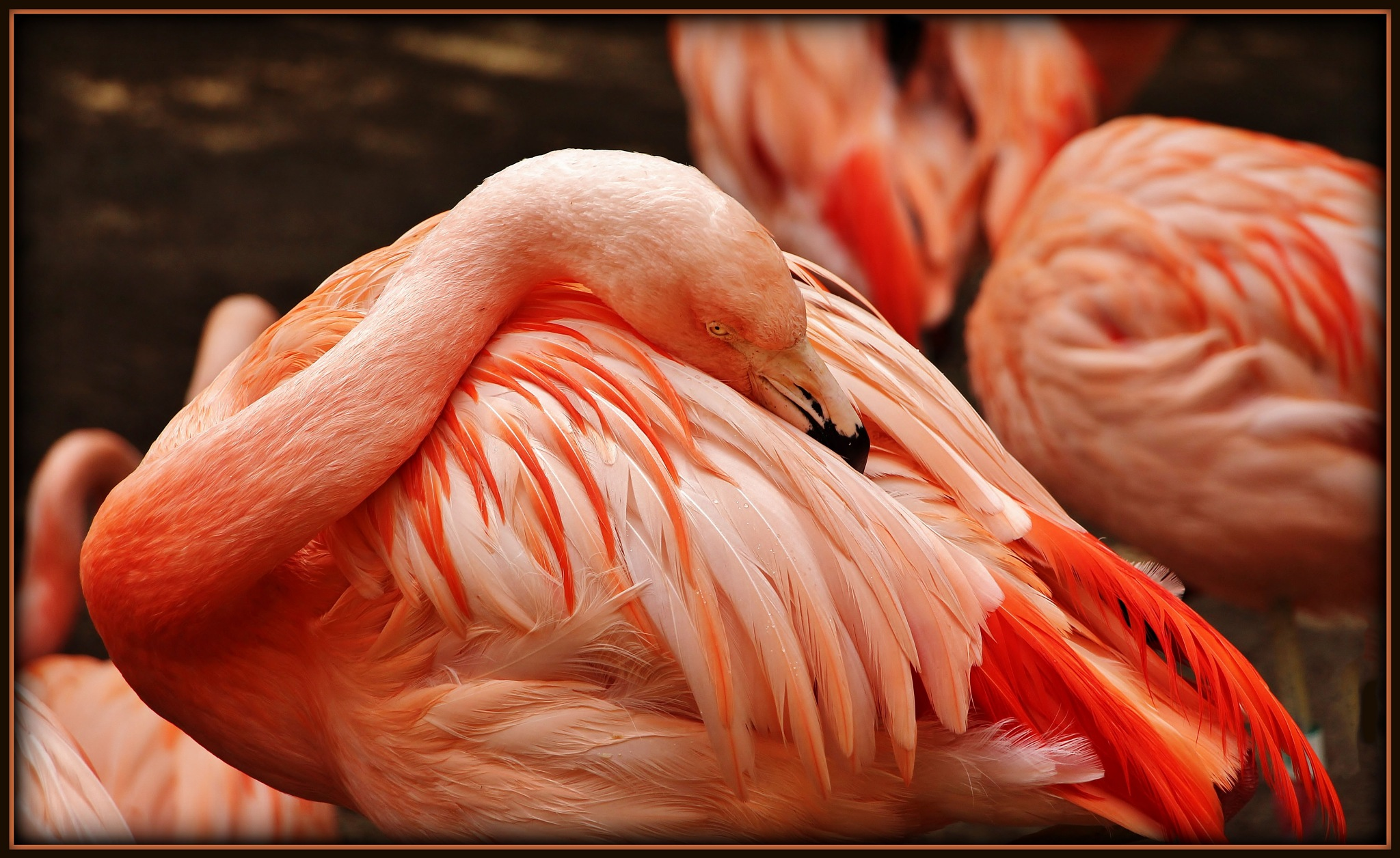 flamingo by suhad chahla