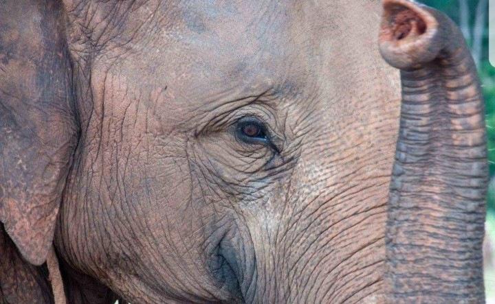 Thailands elephants  by Paula Simone Ashcroft