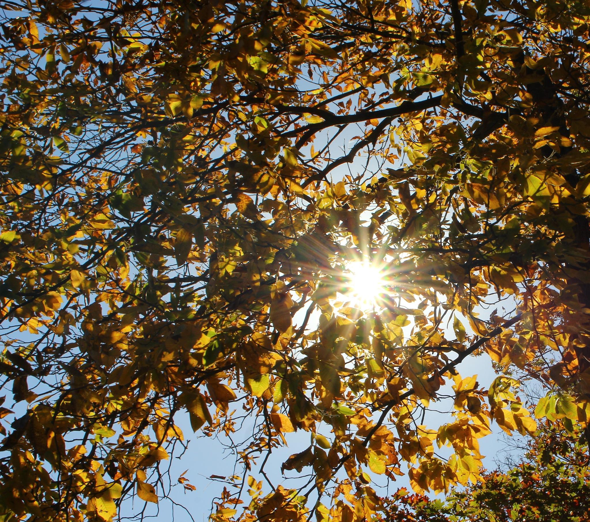 sunbursts by Jim