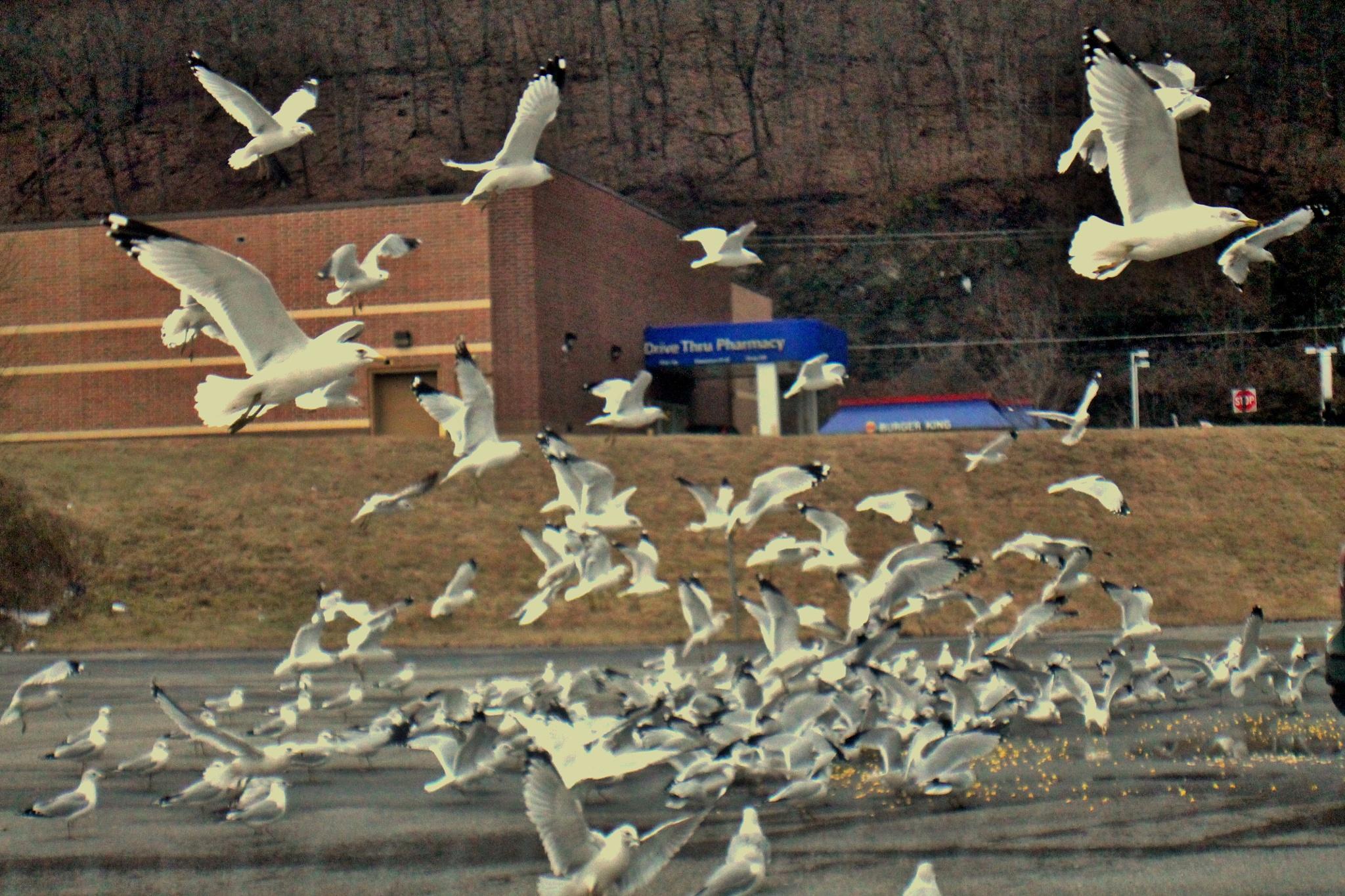 feeding the sea gulls by Jim