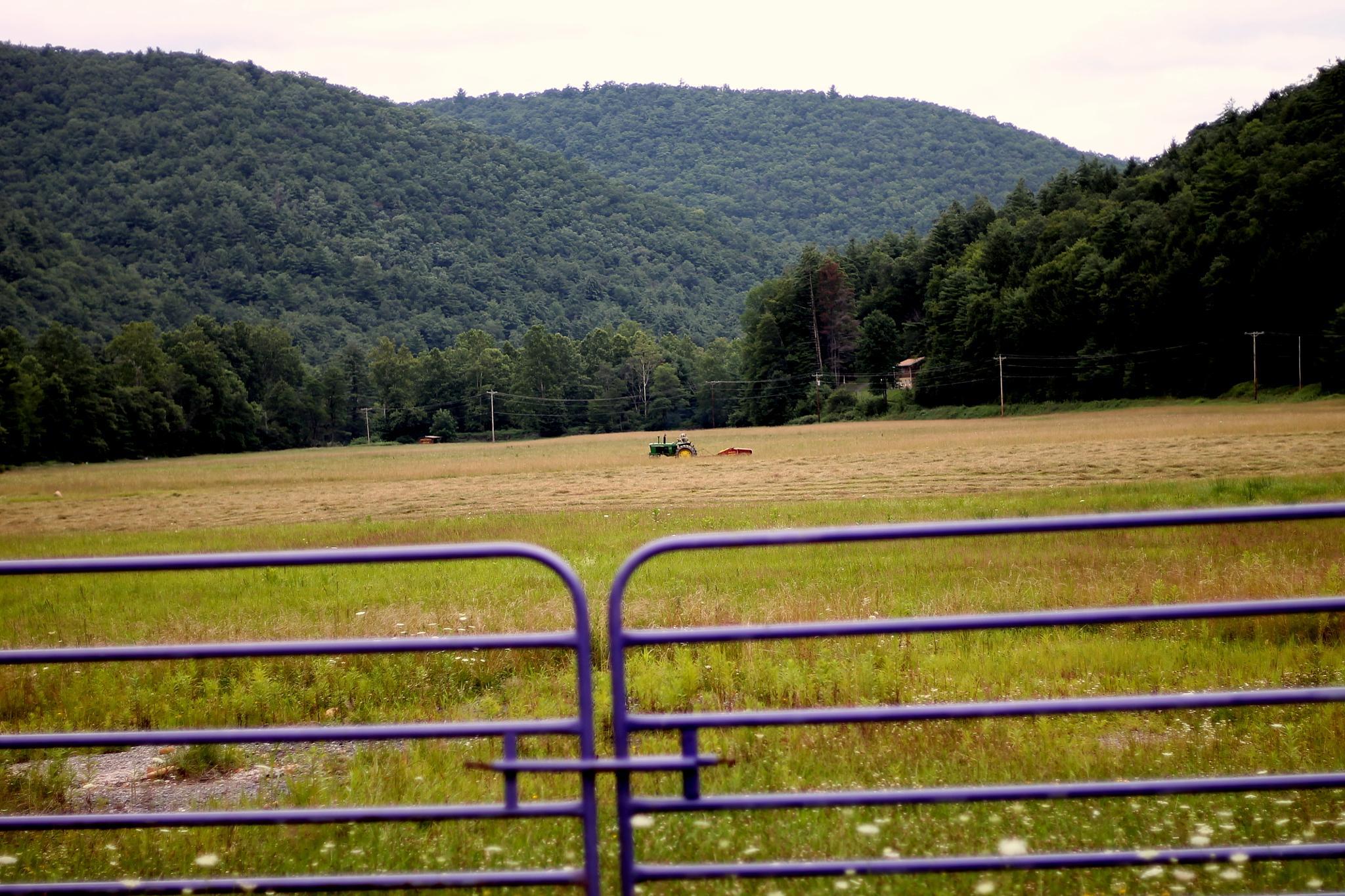 making hay by Jim