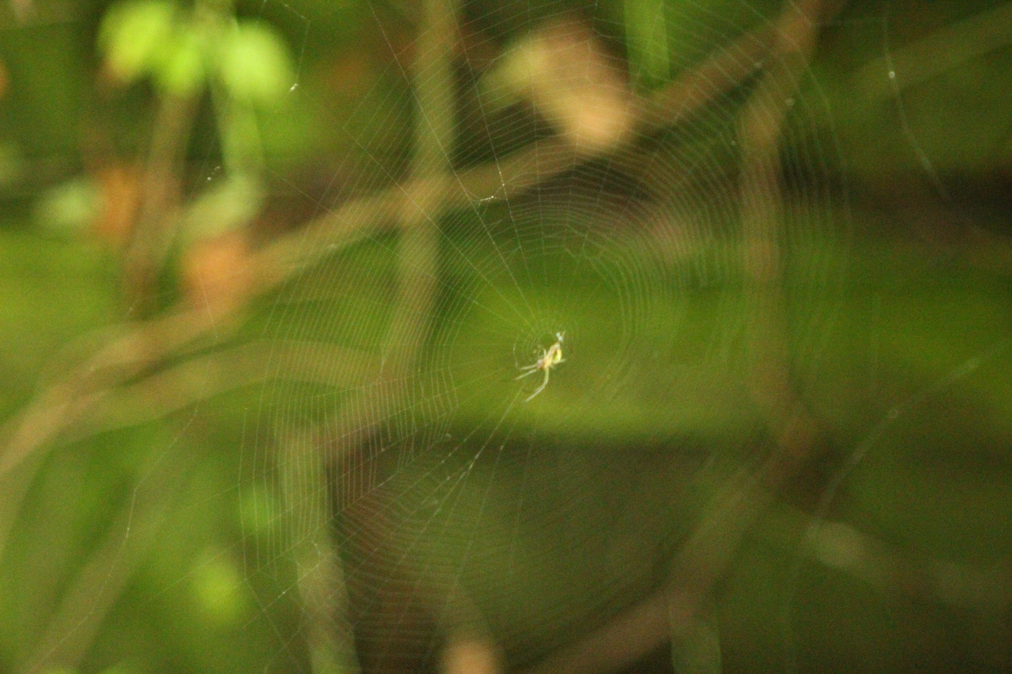 spider and web by Jim