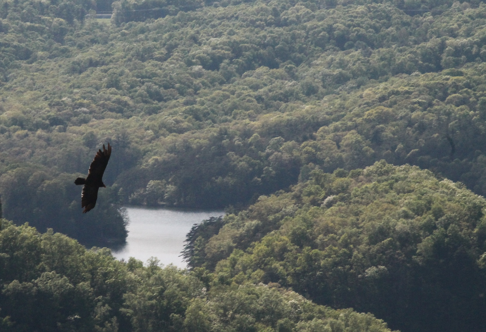 hawk over the lake by Jim