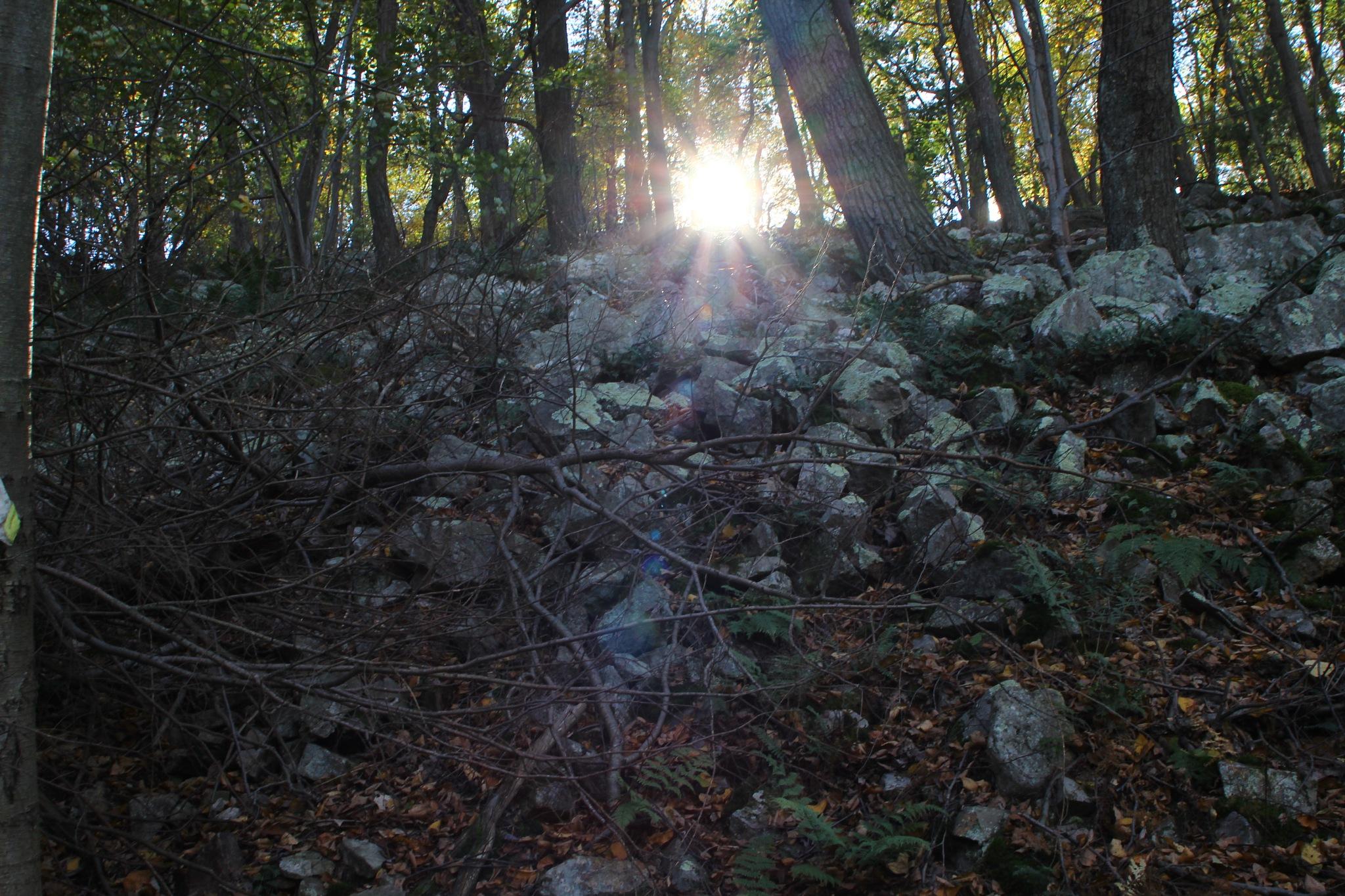 sun peeking thru the trees by Jim
