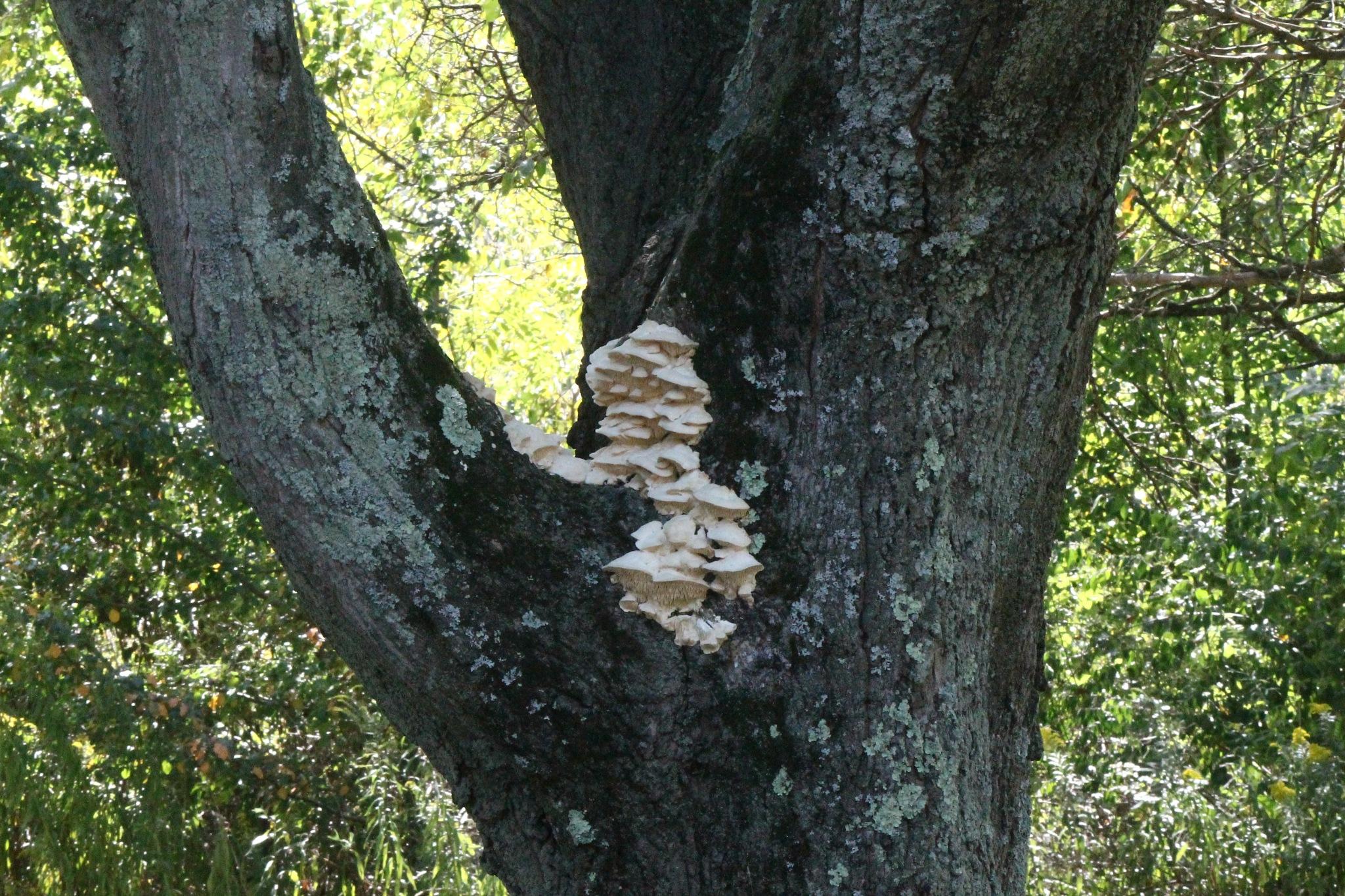 tree fungus by Jim