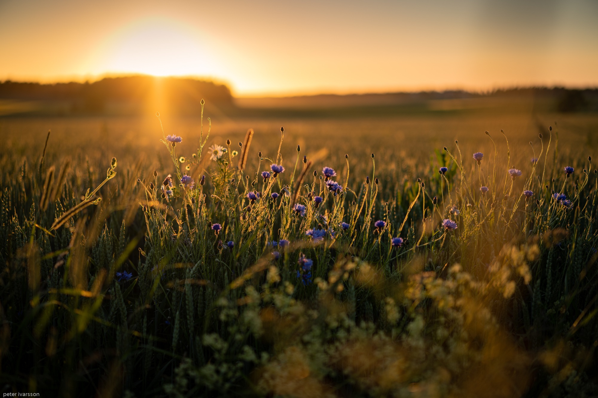 Midsummer day sunset by Peter Ivarsson