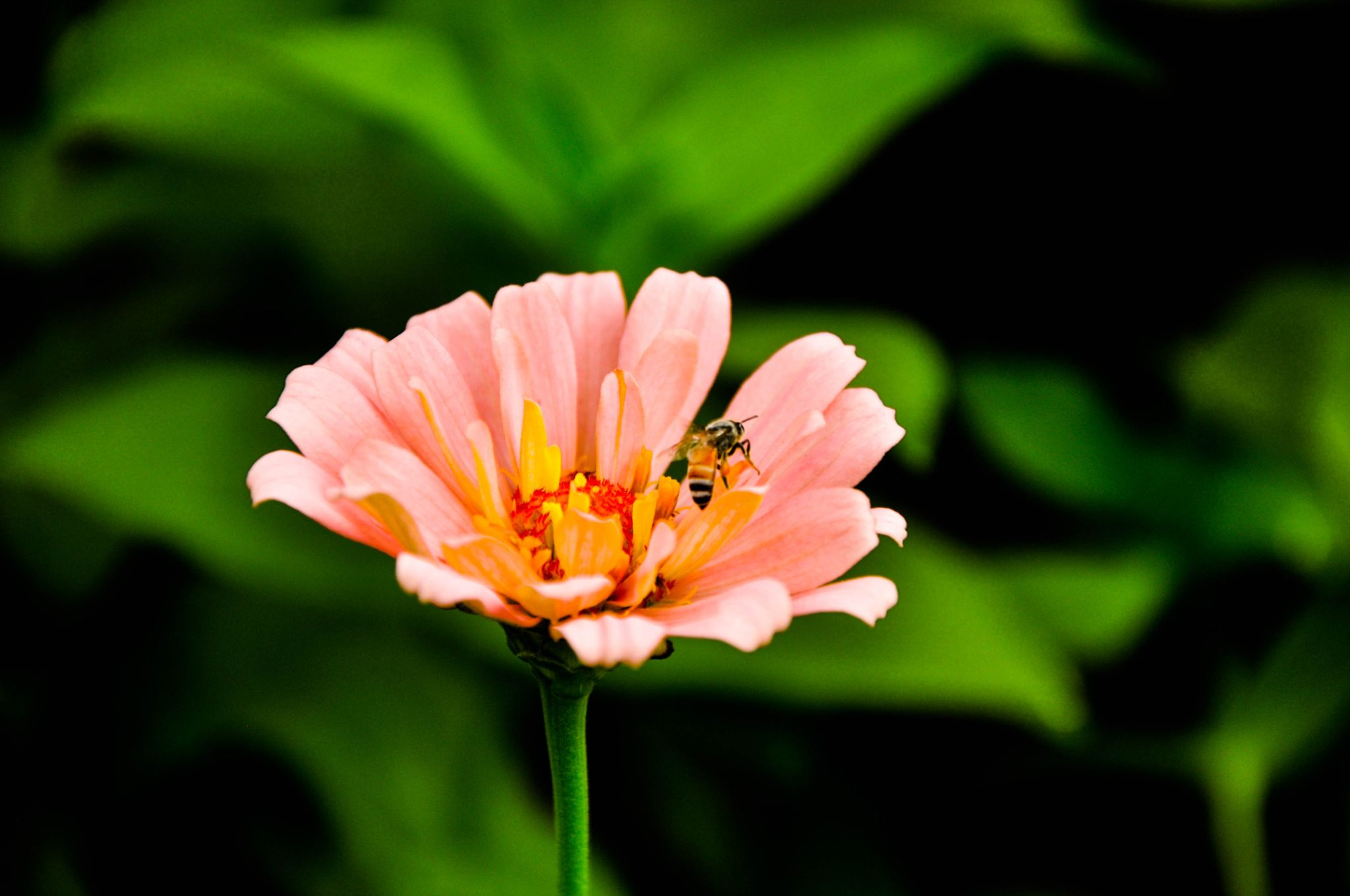 Busy Bee by photograffer