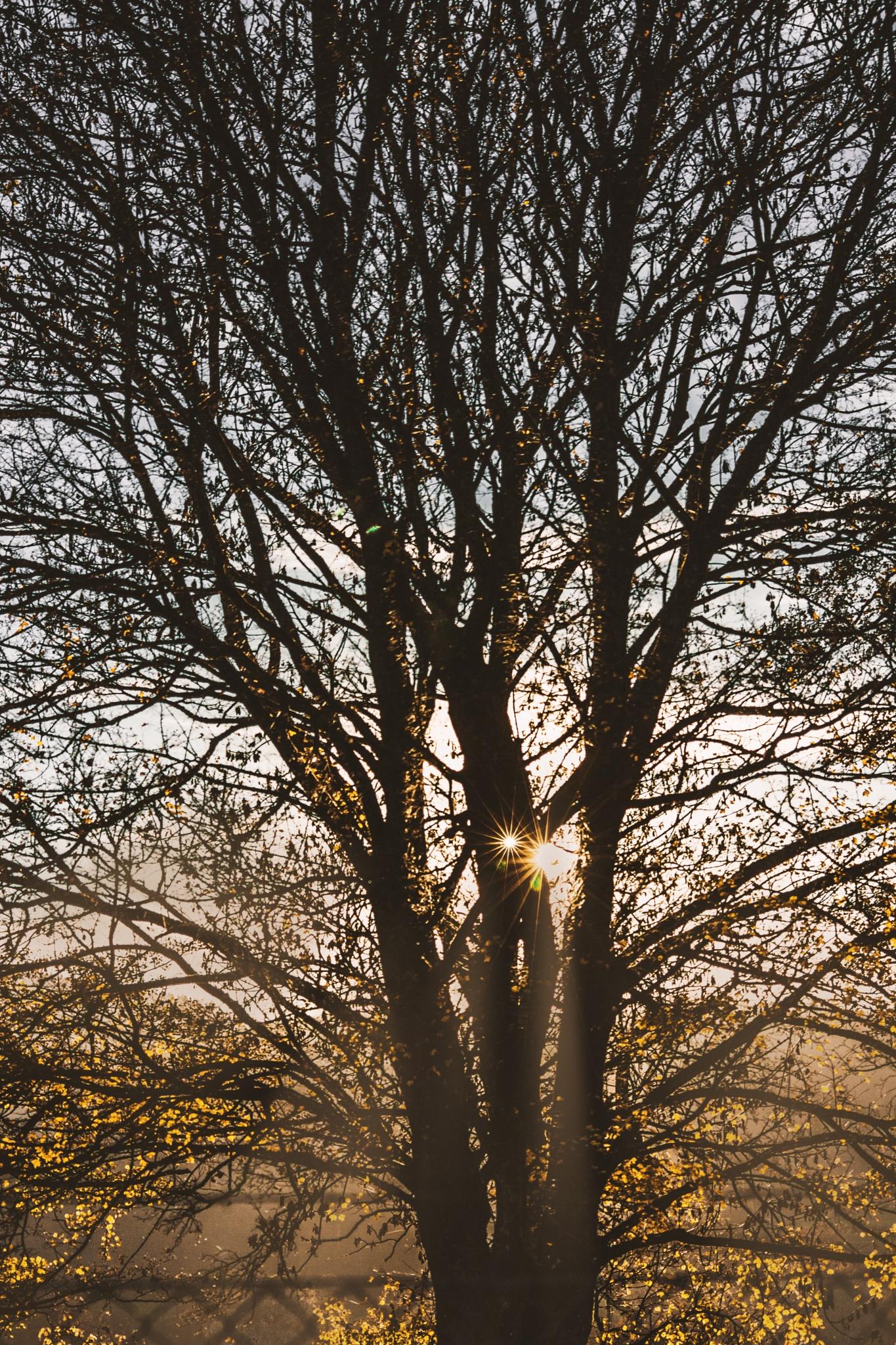 Sun Set Tree by illenbergair.tamino