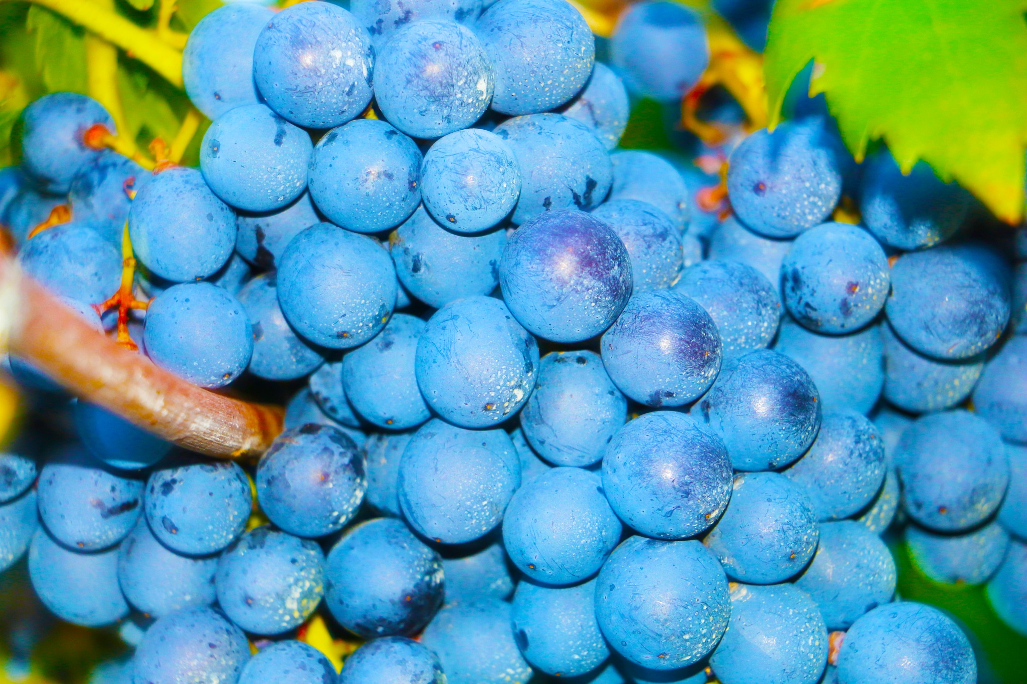Grapes by RistylePhotography