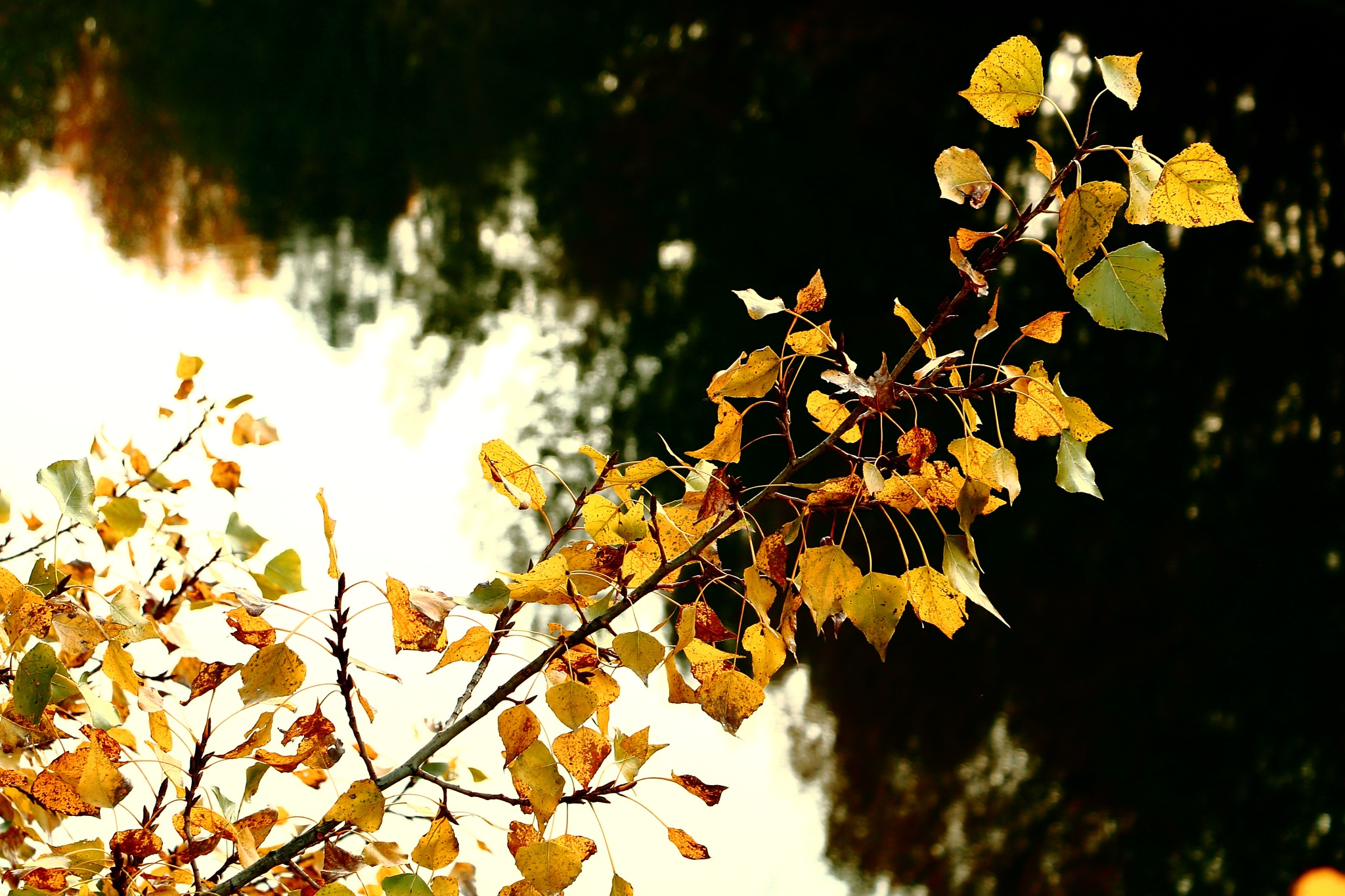 autumn leaves by RistylePhotography
