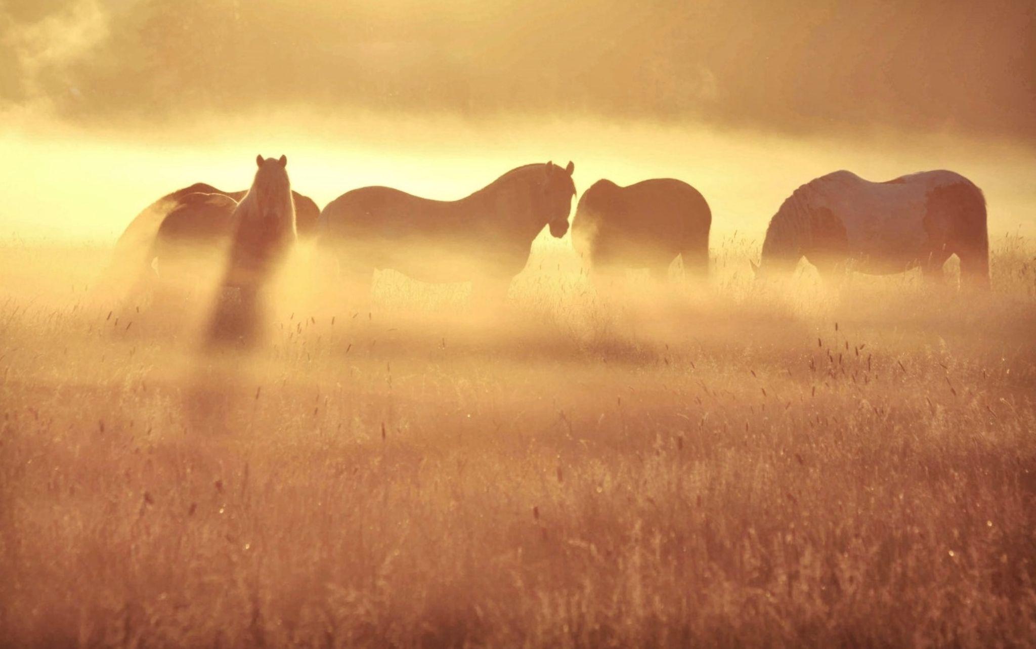 dawn horses by annemieke