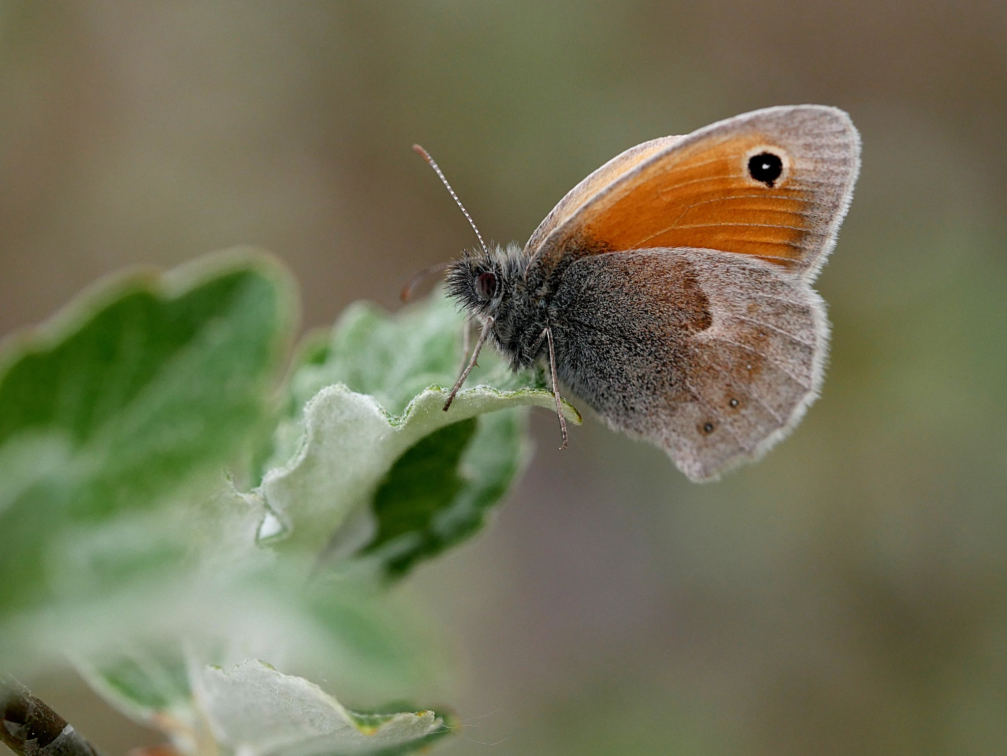 un papillon by Laurence Laurence
