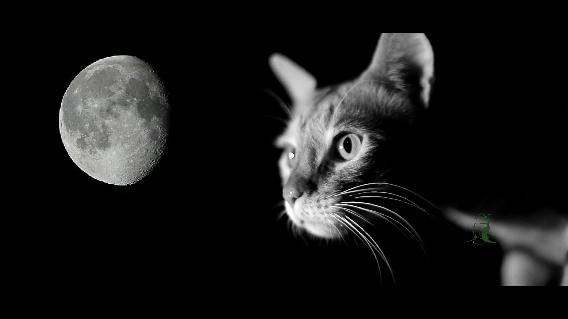 Moony cat by Shiv Bharadwaj