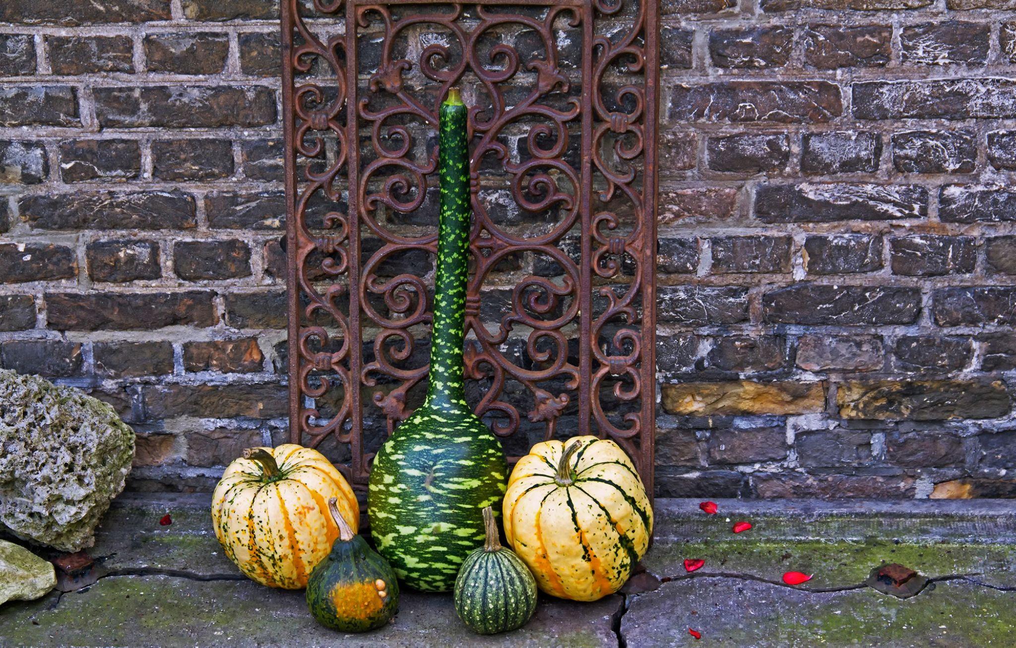 pumpkins by Birthe Kirk Gawinski