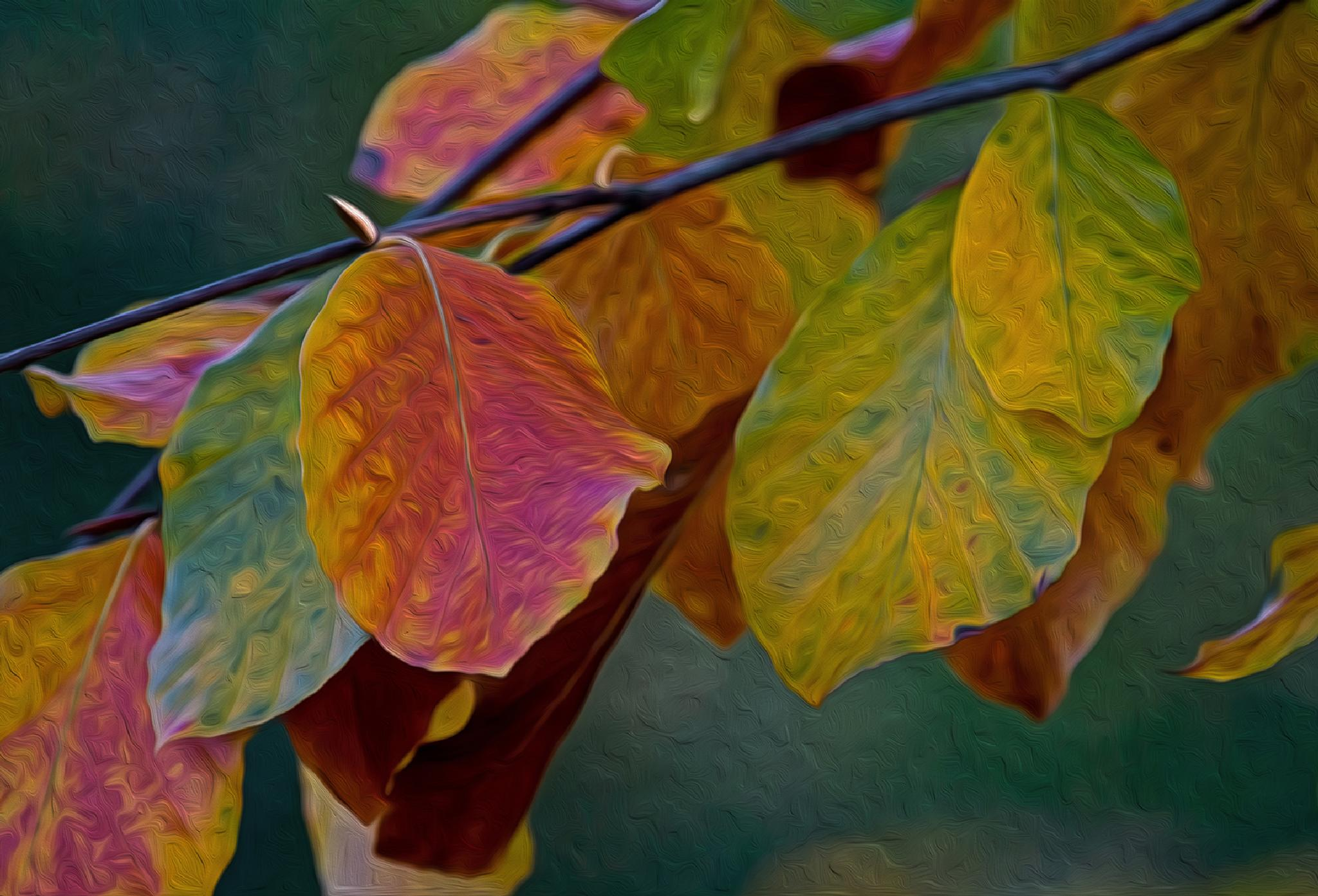 autumn leaves by Birthe Kirk Gawinski