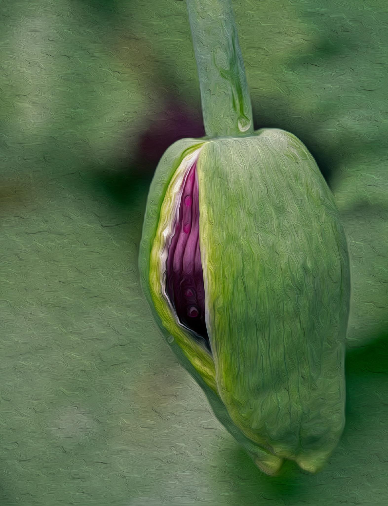 poppy in disguise by Birthe Kirk Gawinski