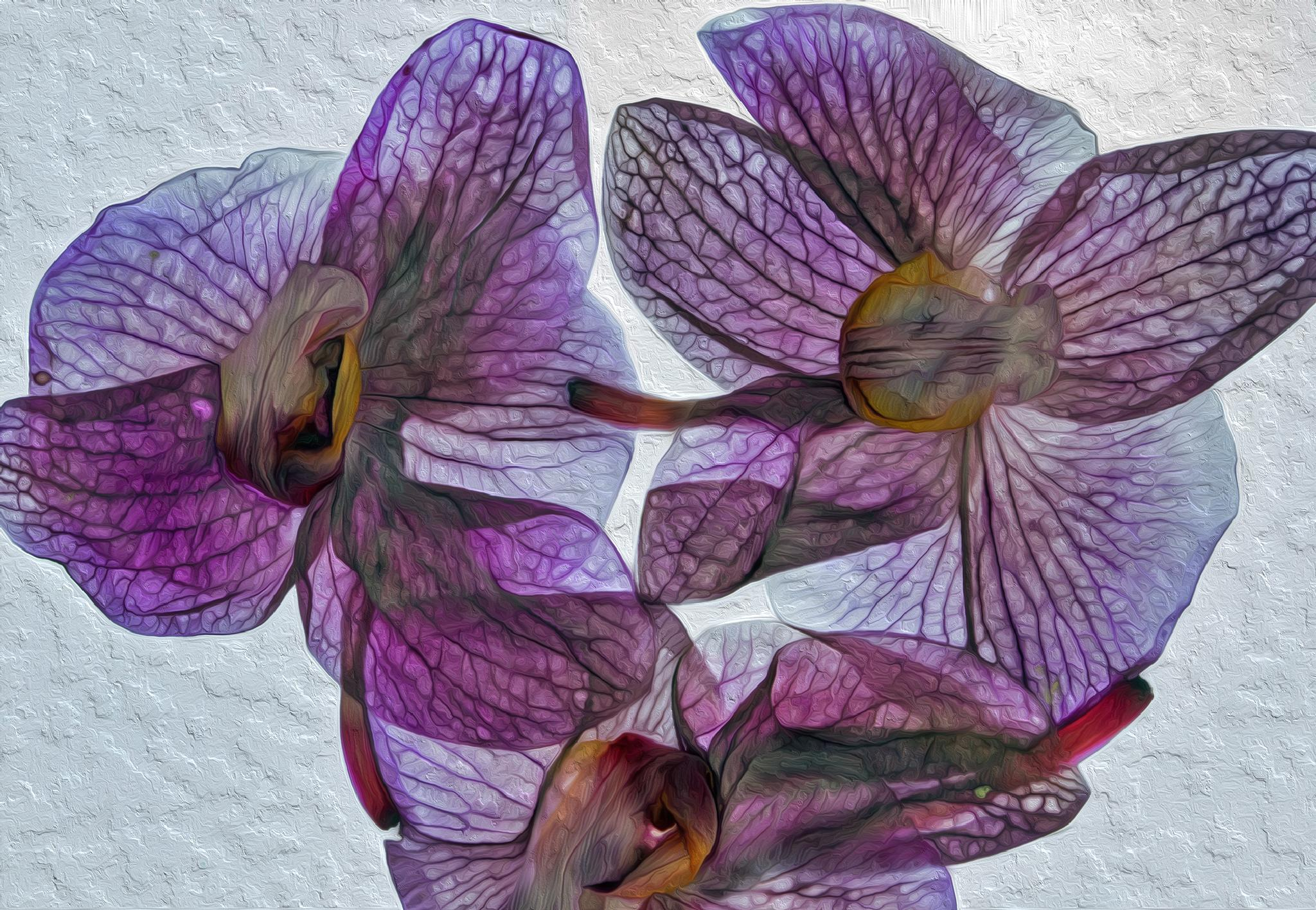 trio of dried orchids by Birthe Kirk Gawinski