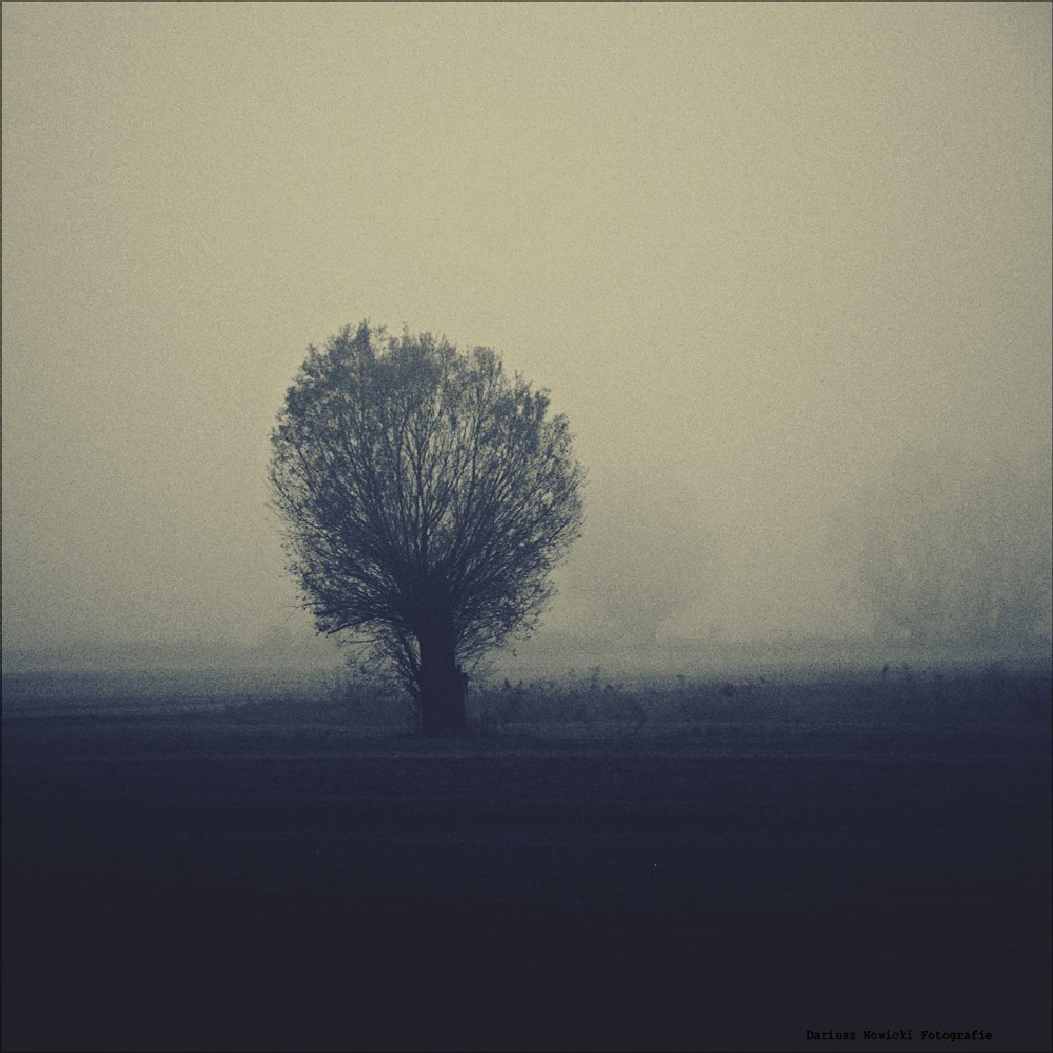 Untitled by darnowic