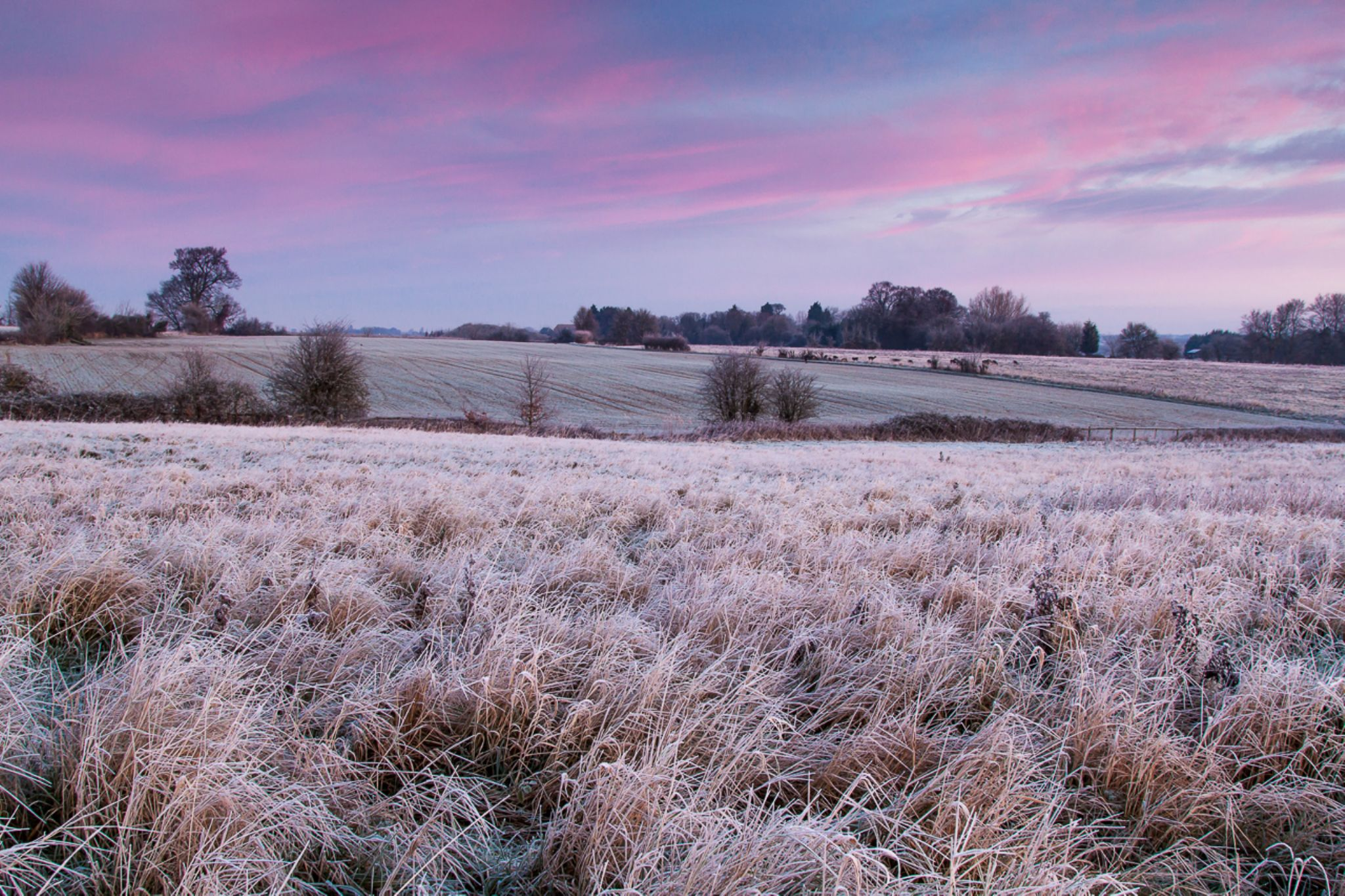 Frozen by Hammermad