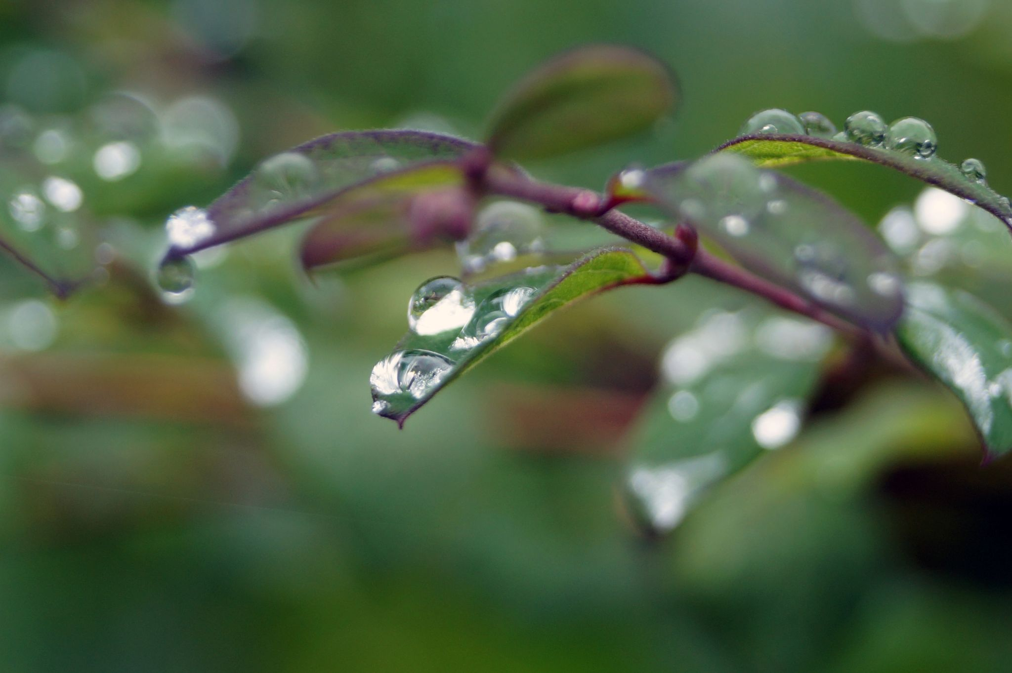Droplets by Syeda Rosina Begum