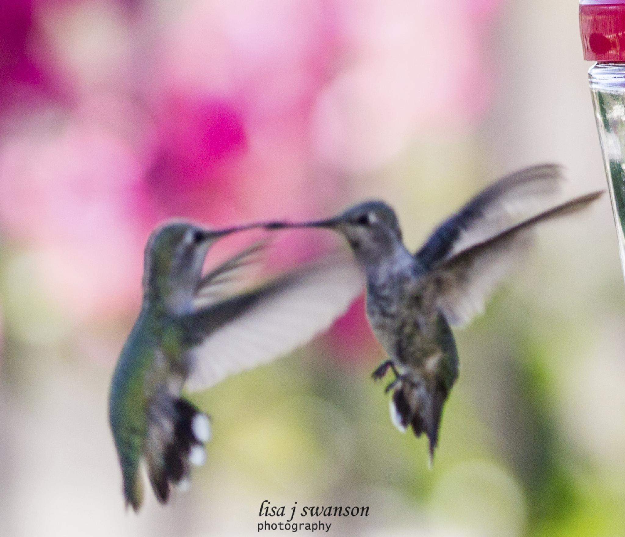 Hummingbirds kissing by lisa.meyersswanson