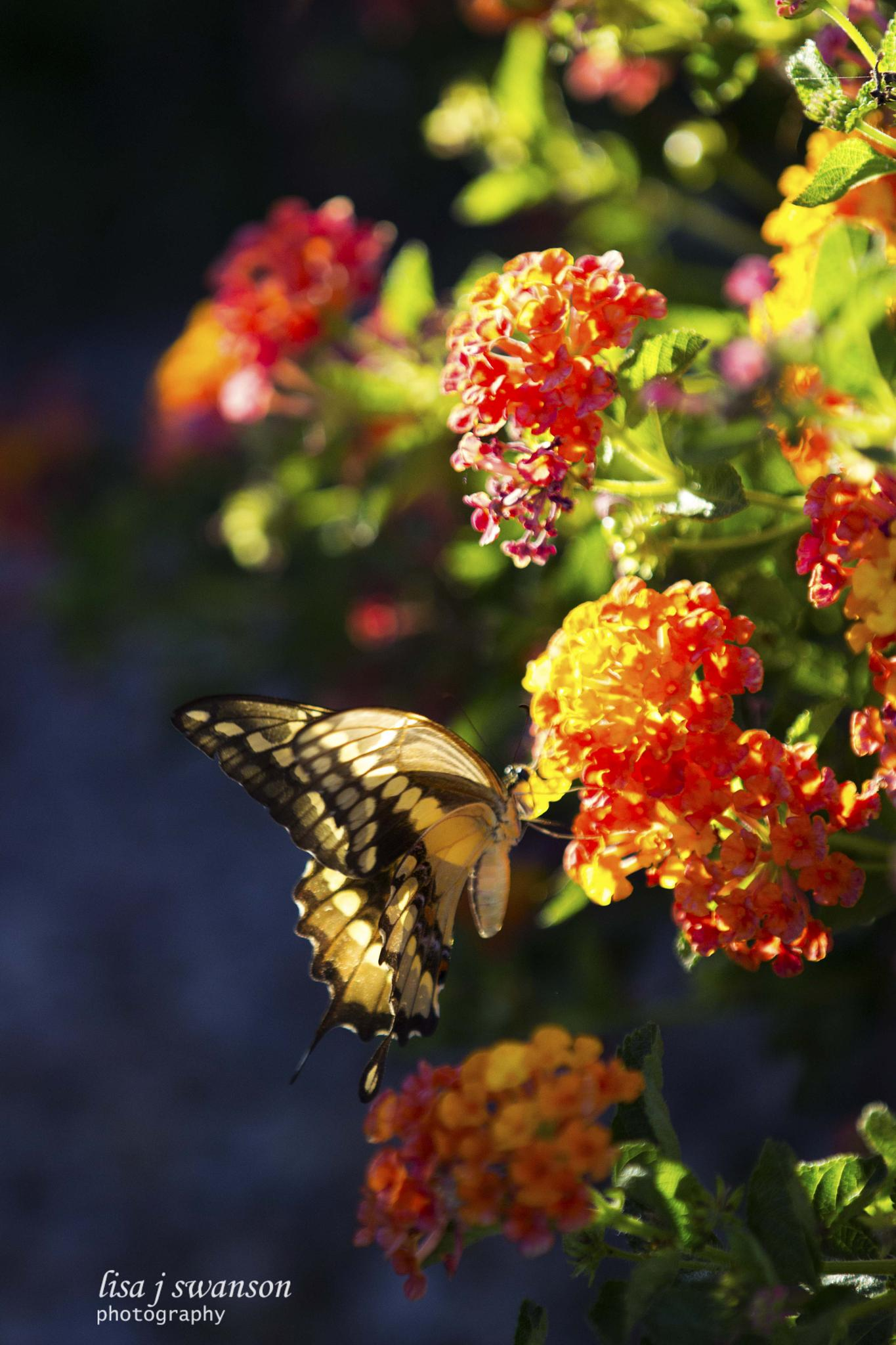 Photo in Animal #animal #nature #flowers #butterflies