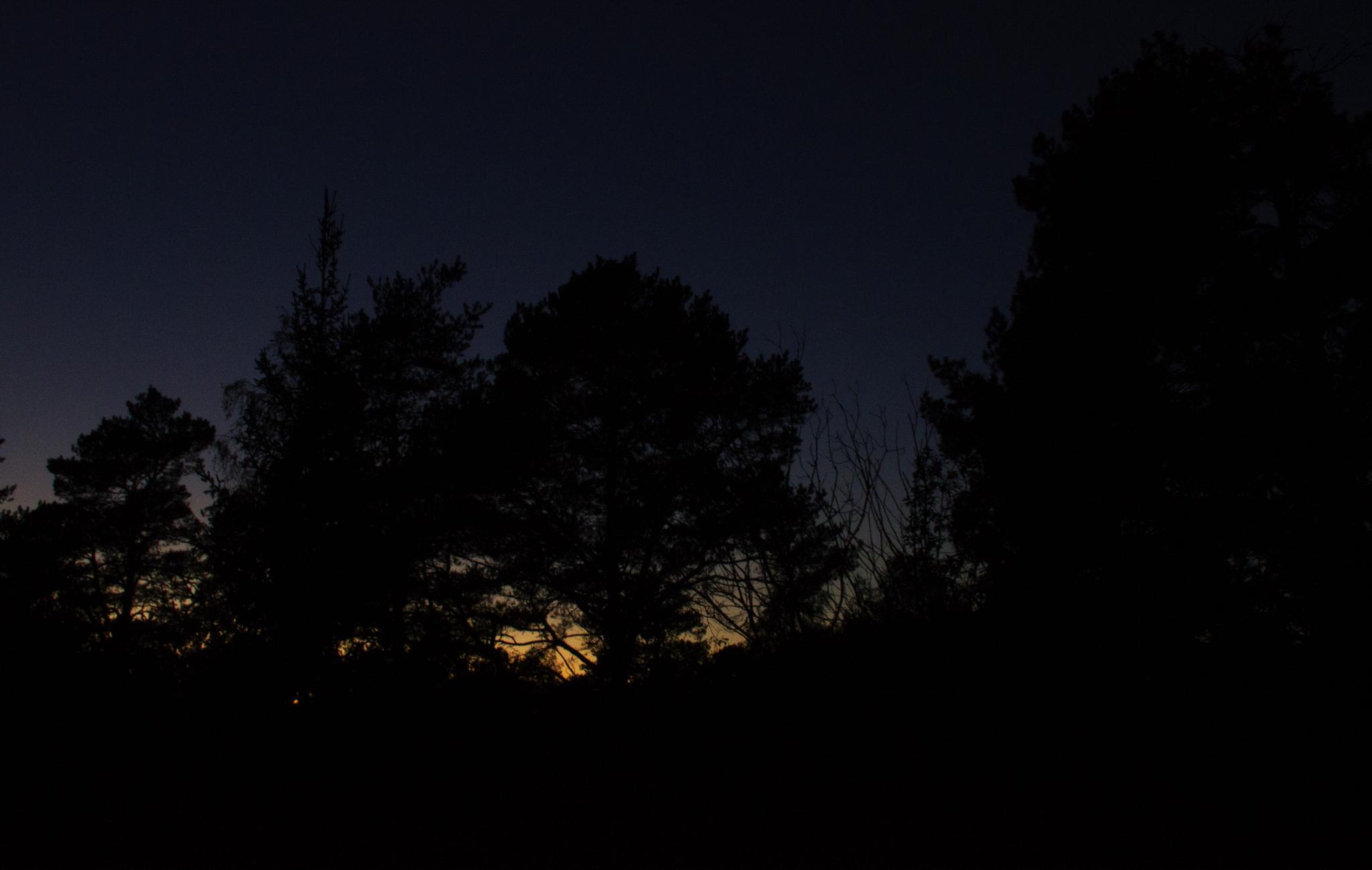 Twilight by Nasta