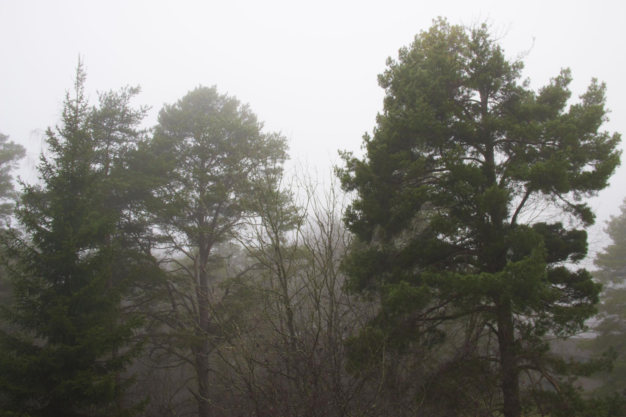 Forest by Nasta