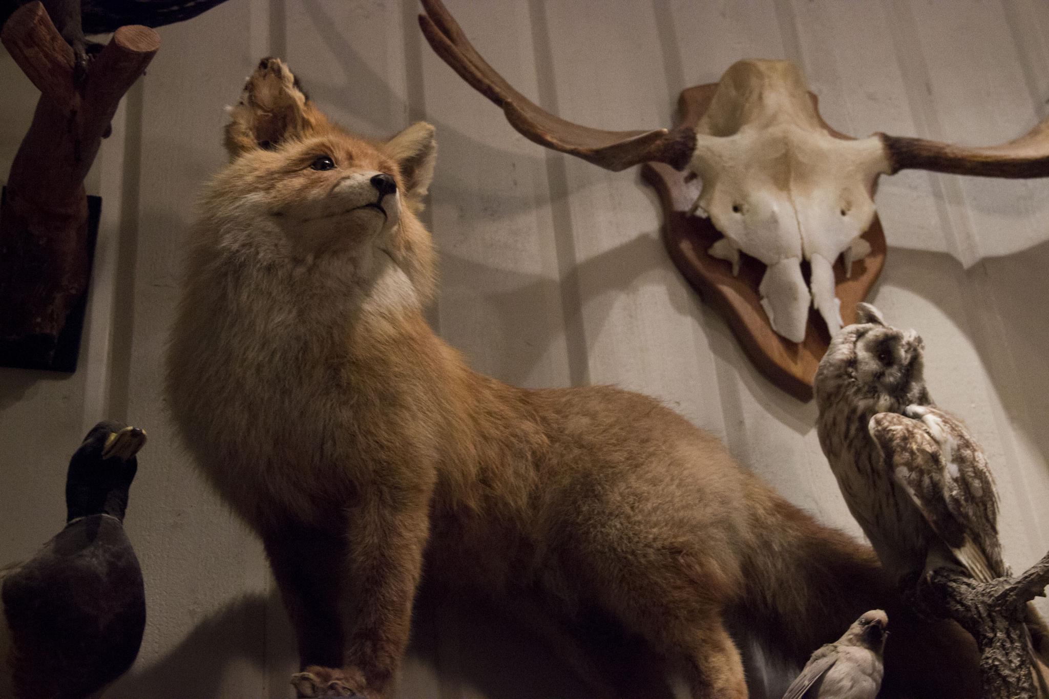 Fox by Nasta